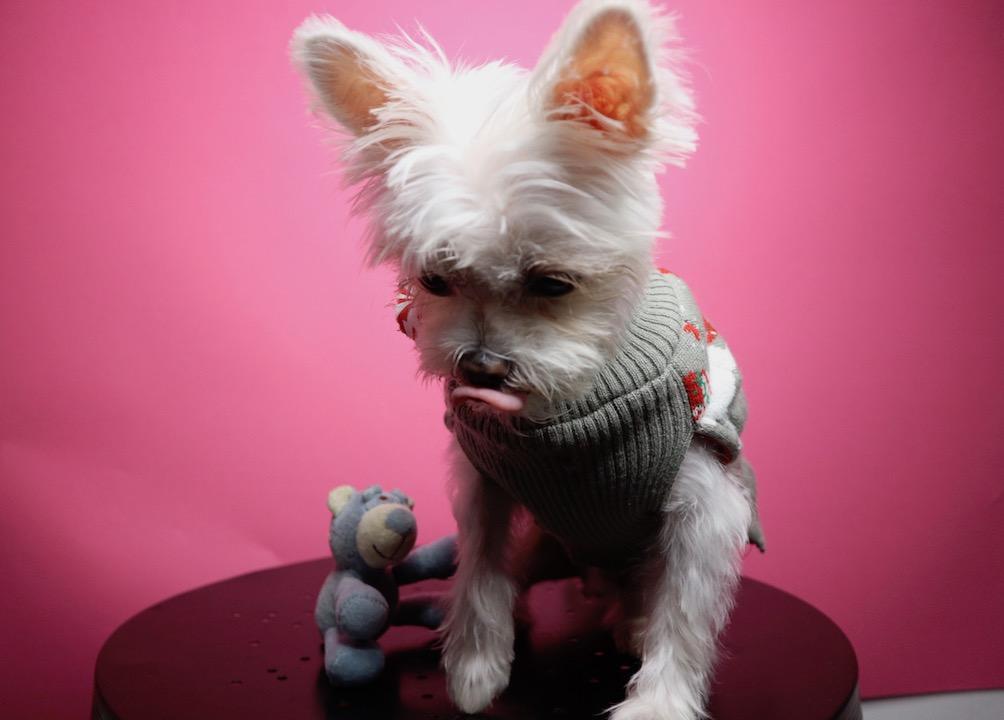 nyc dog influencer.jpg