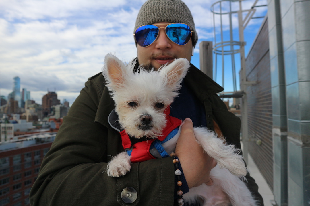 nyc dog influencer tofu.JPG
