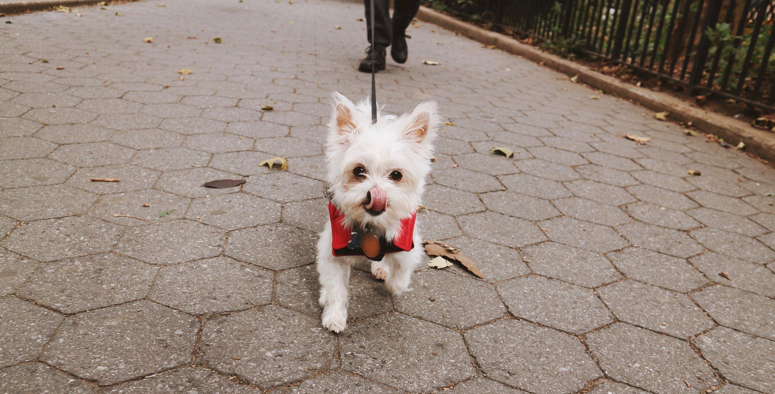 I am tofu the dog influencer.jpg