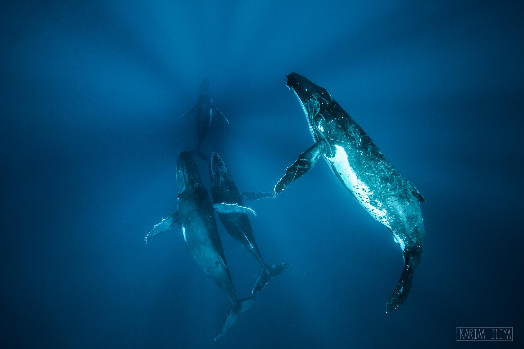 blue-water-ocean-whale-meet.jpg
