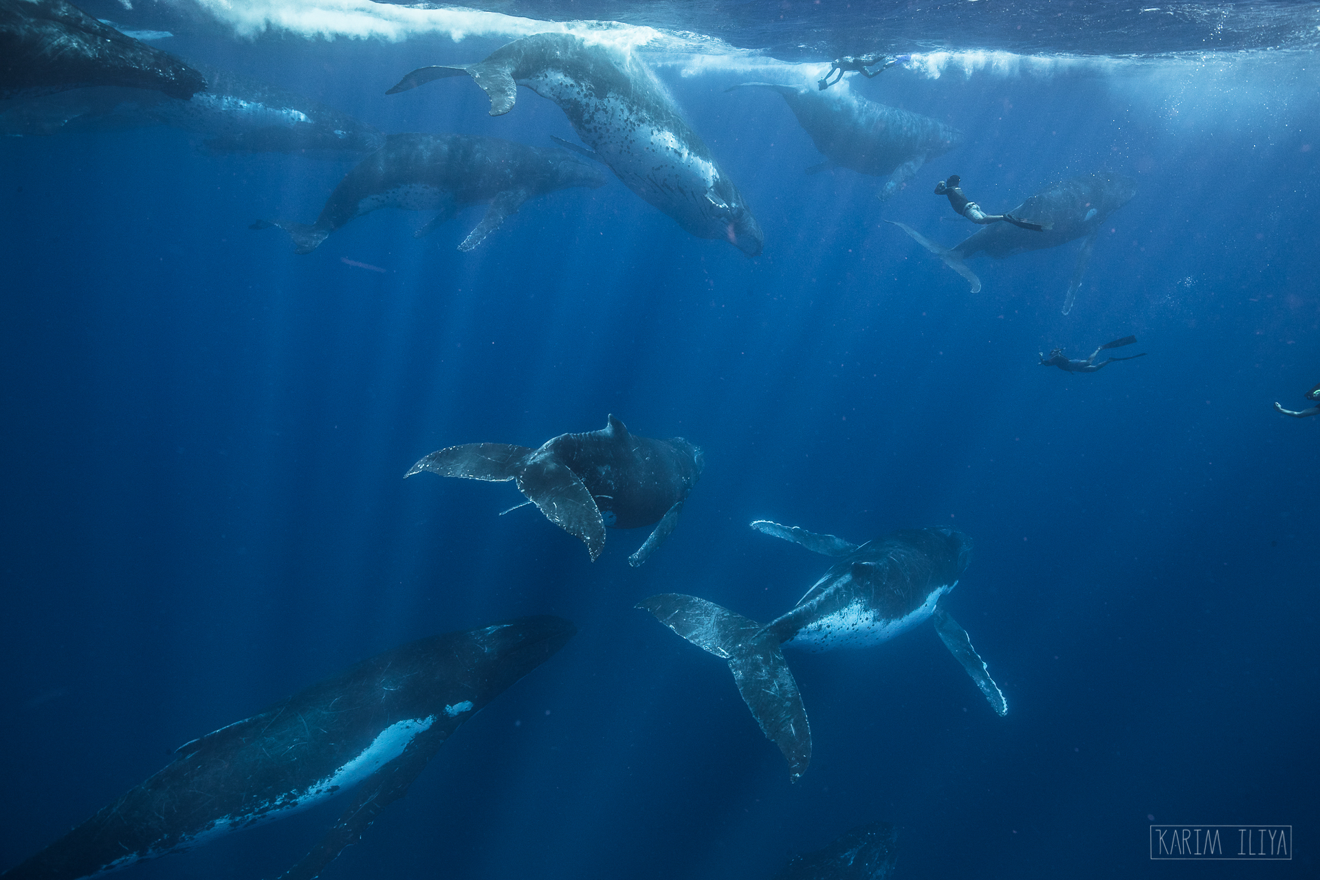 dance-with-whales-humpback-underwater.jpg