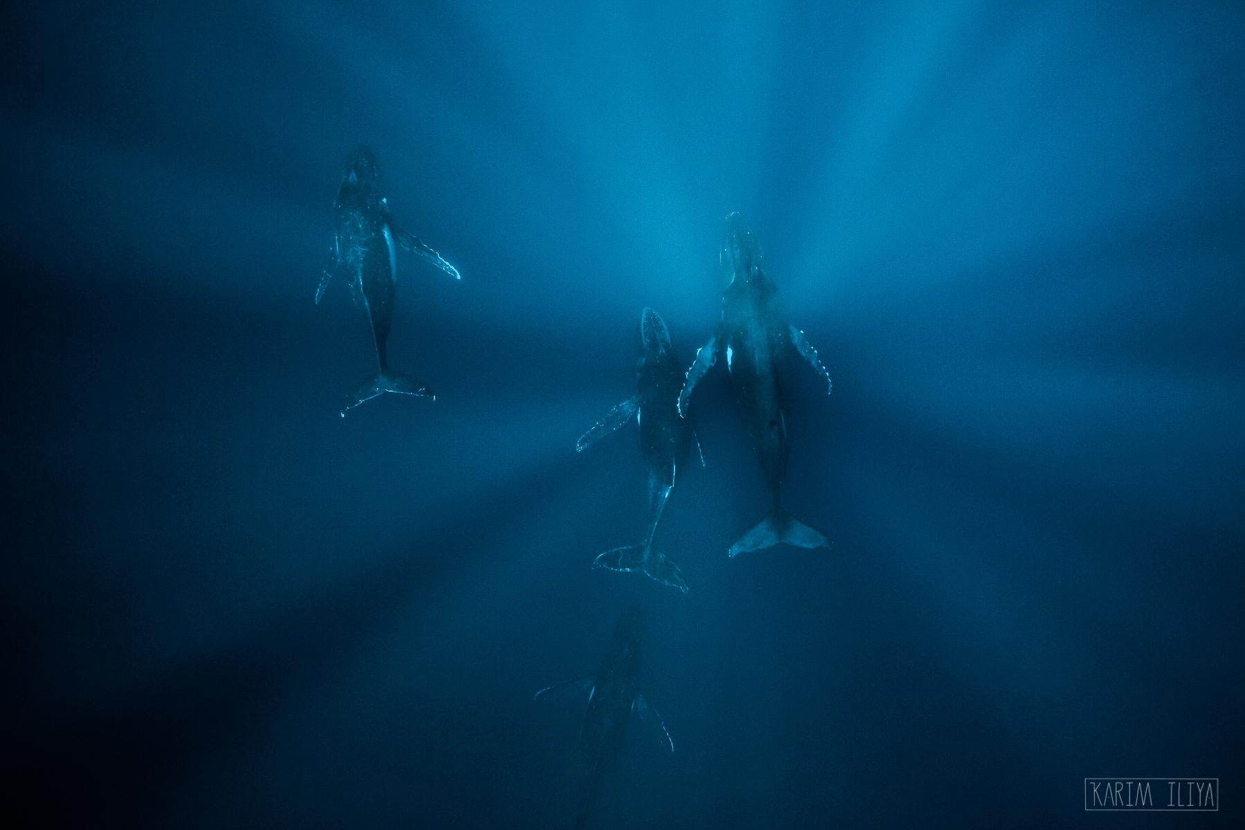 explore-tonga-humpback-guide-vacation.jpg