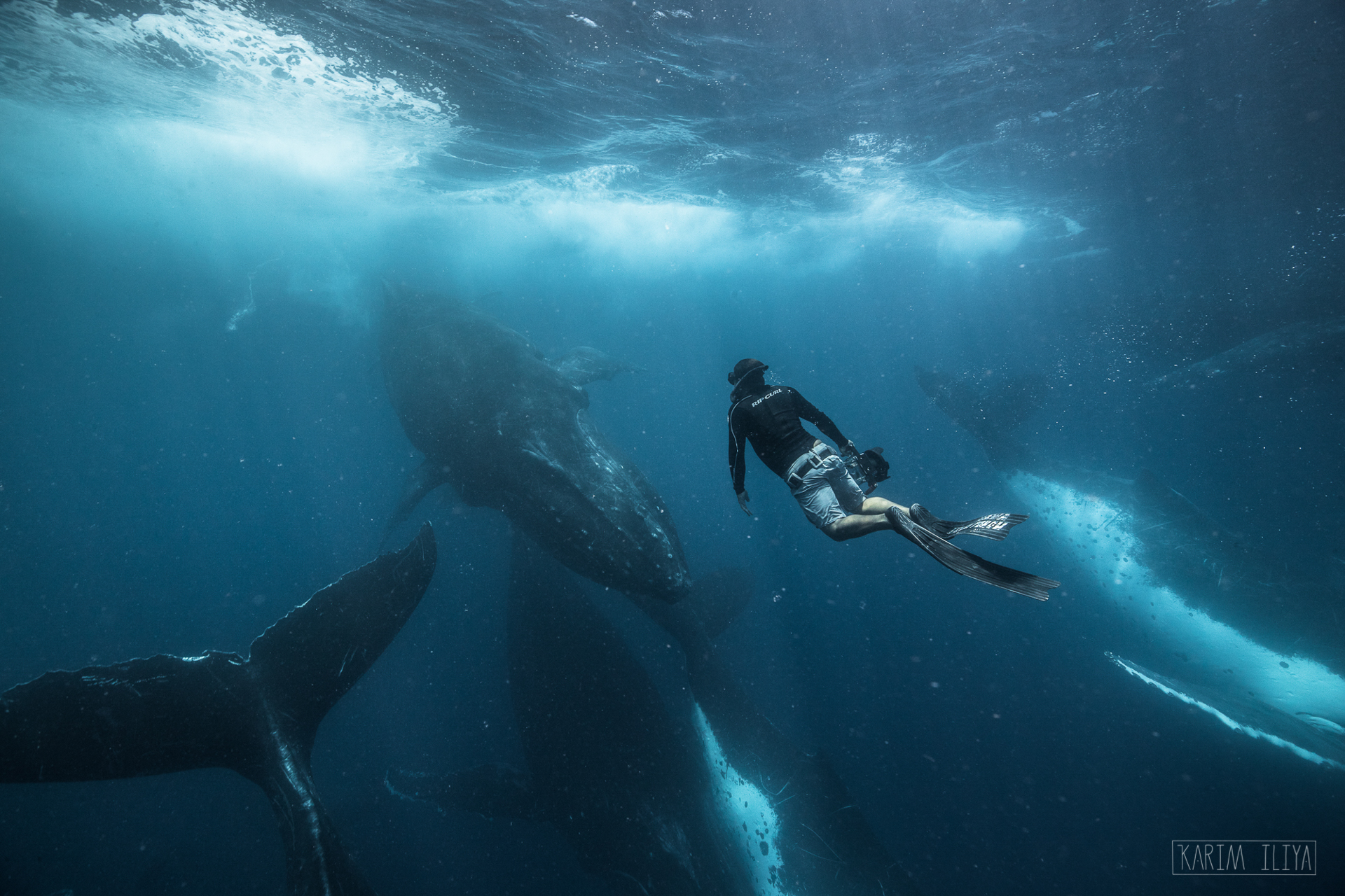 freedive-tonga-dance-with-whales.jpg