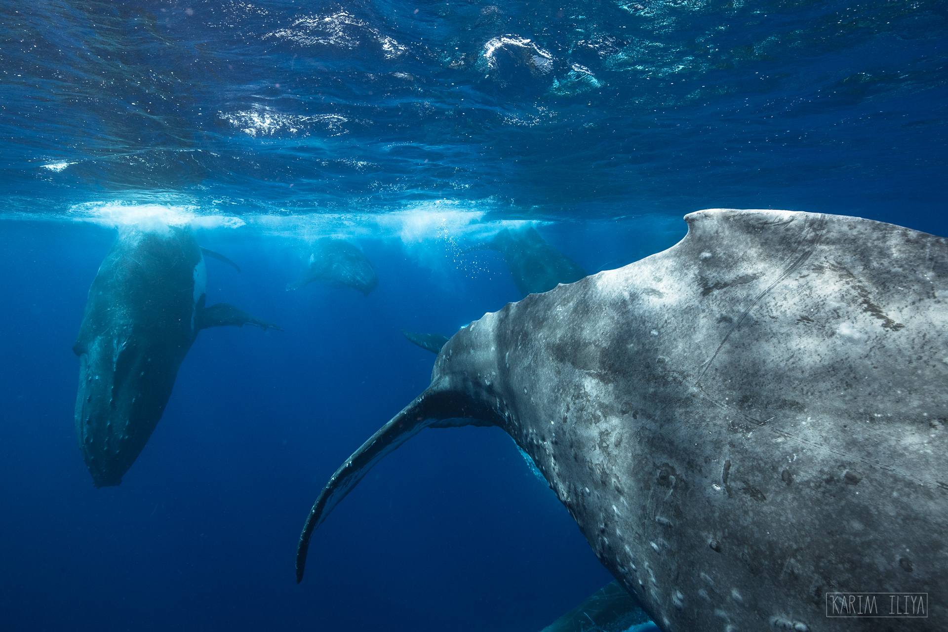 humpback-tail-swim-with-whales.jpg