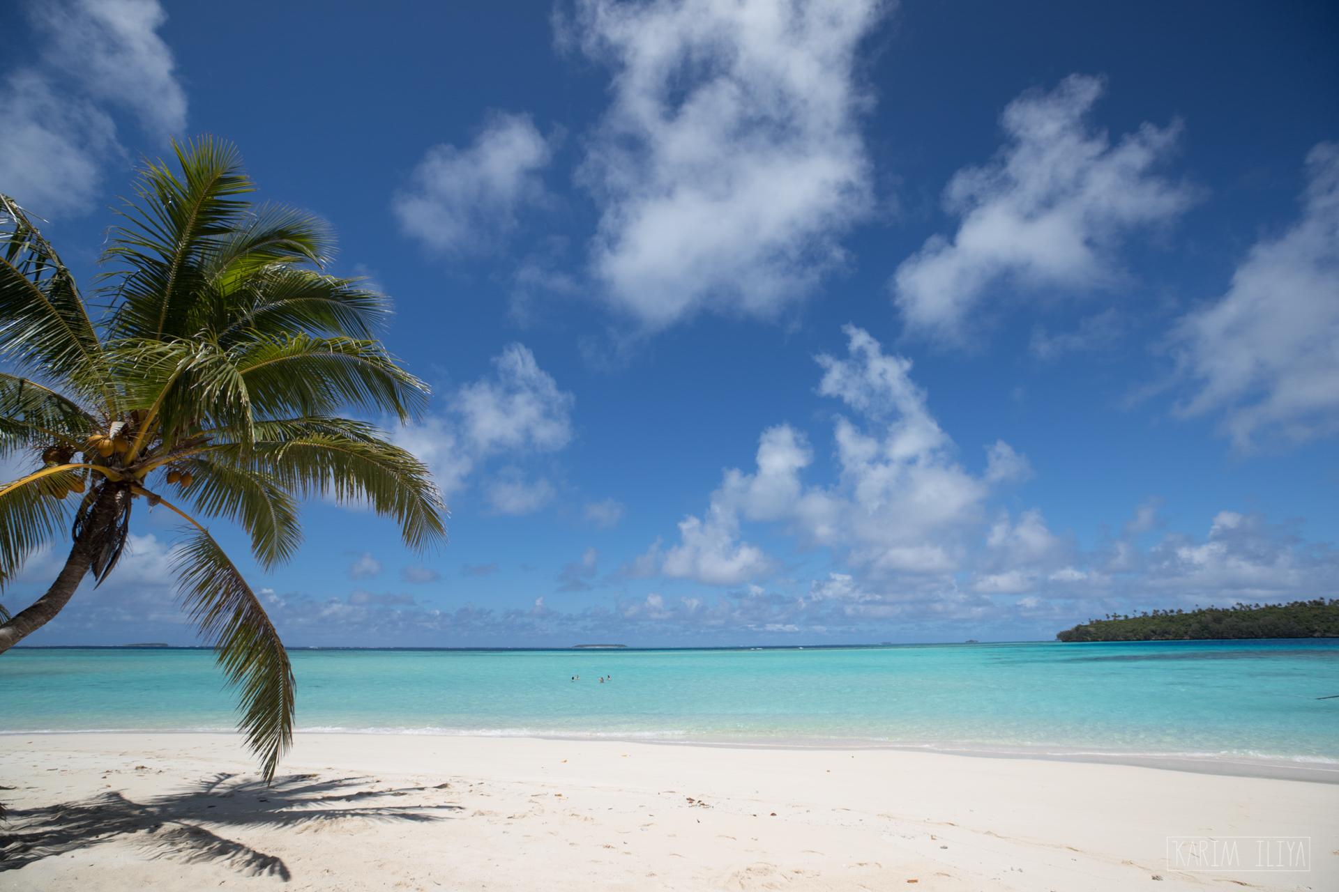 palm-tree-ocean-beach-sand.jpg