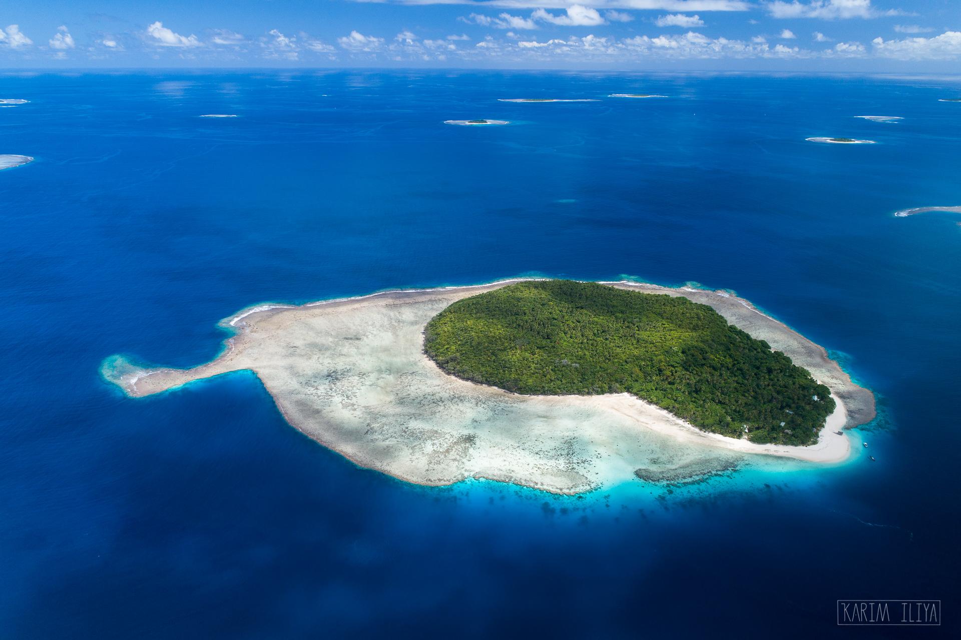 private-island-tonga-swim-whales.jpg