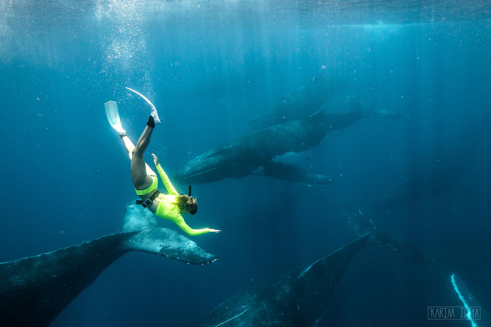 swim-with-whales-tonga-underwater-dive.jpg