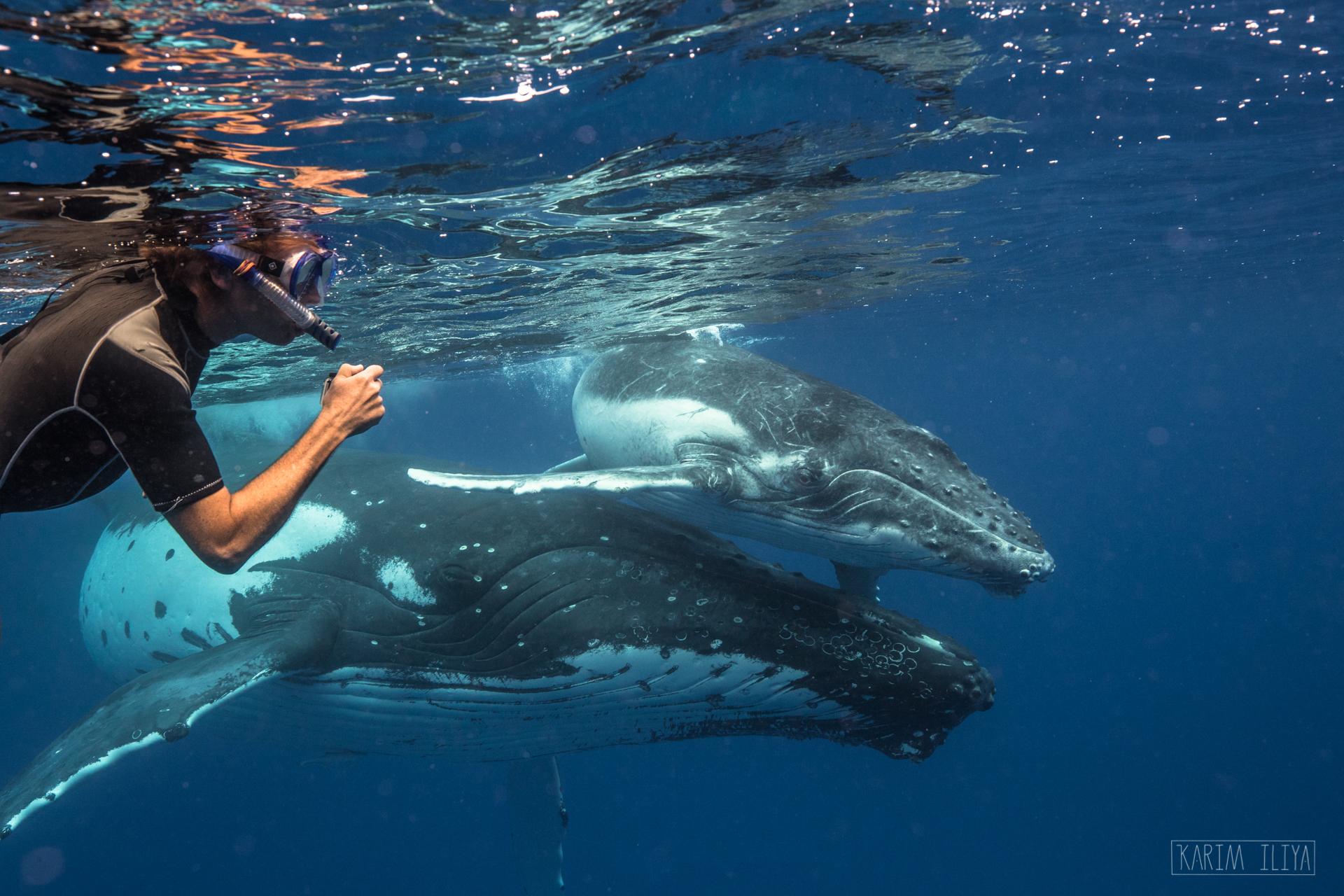 tongan-guide-snorkel-whales-join.jpg