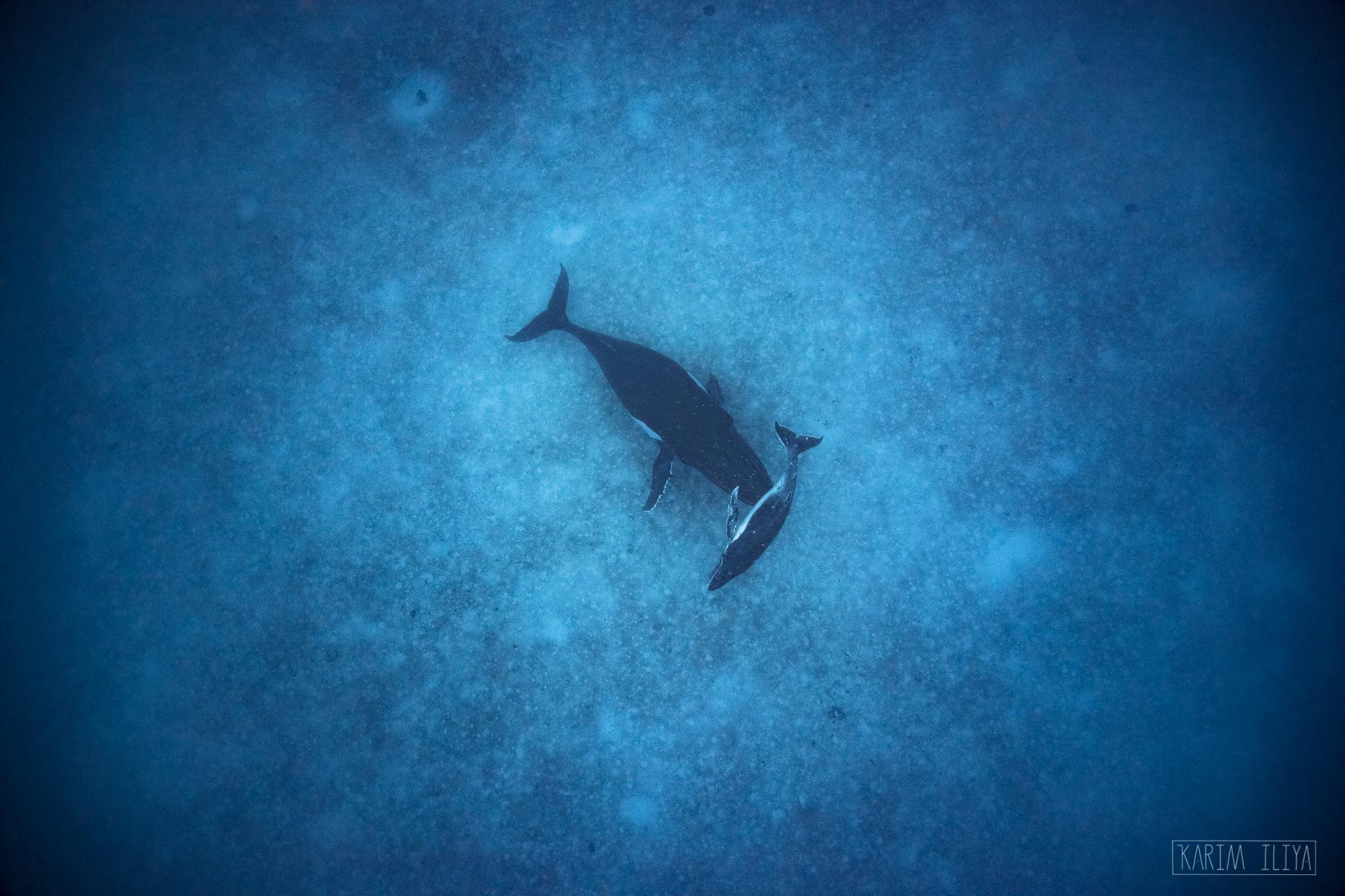 tropical-freediving-deep-ocean-blue.jpg