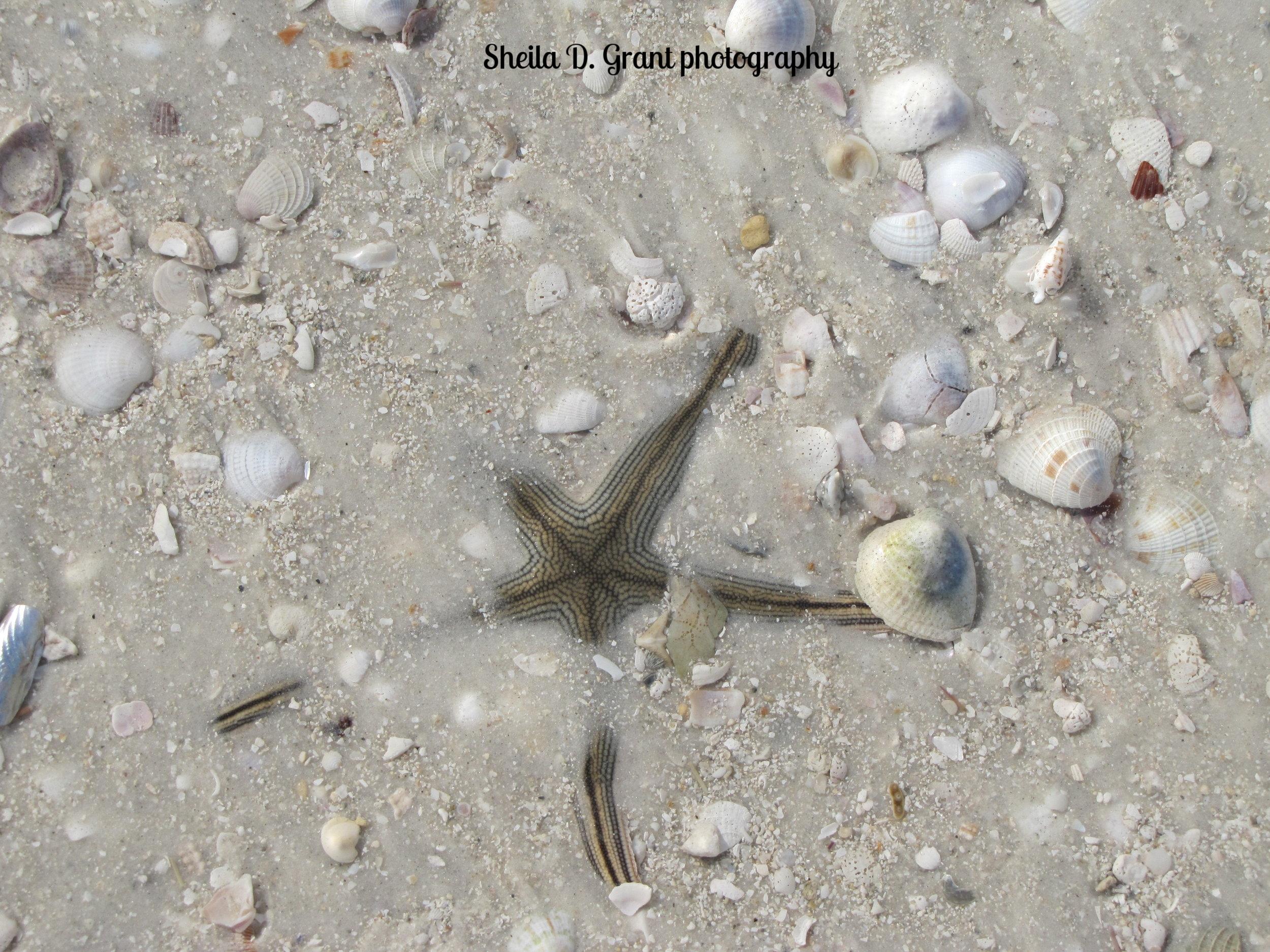 Sea Star in Hiding.JPG