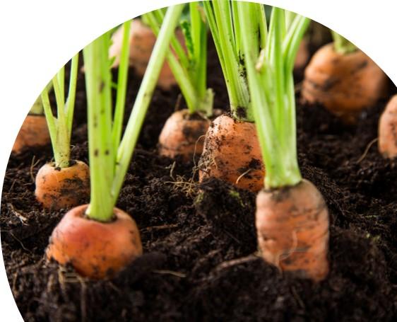 Lær å dyrke dine egne grønnsaker -