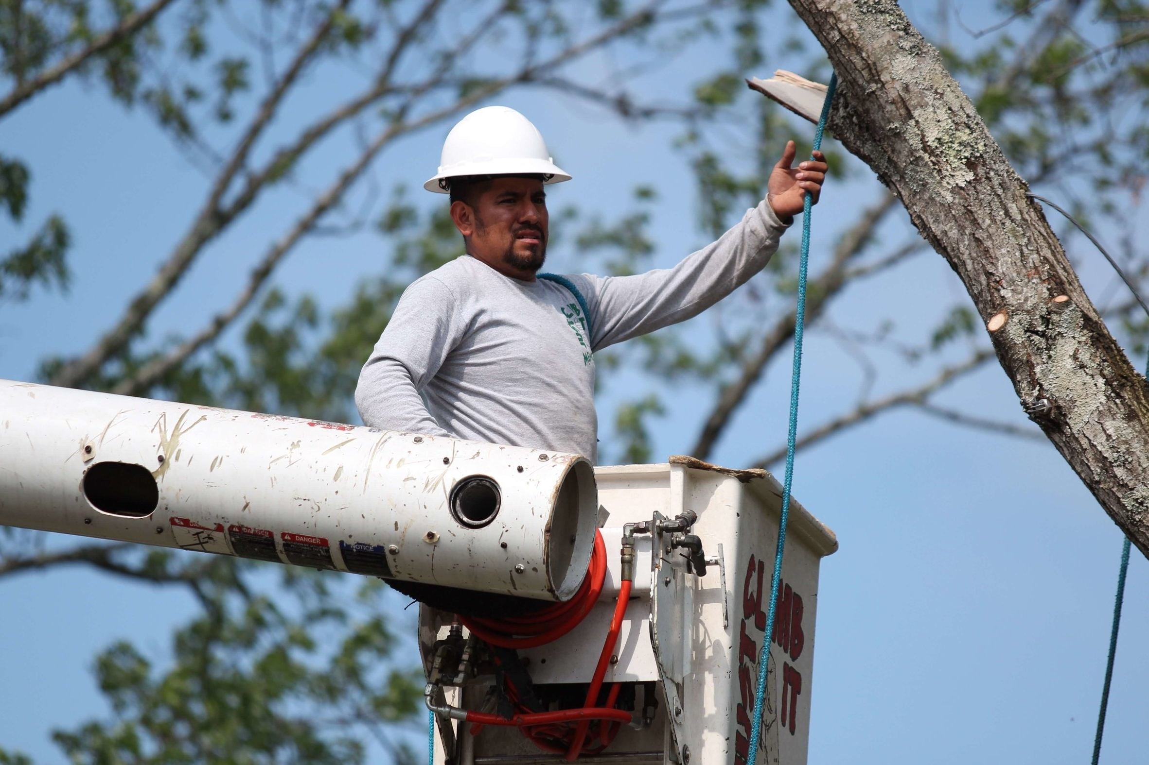 Mencer's Tree Service professional in bucket truck pruning and trimming a tree