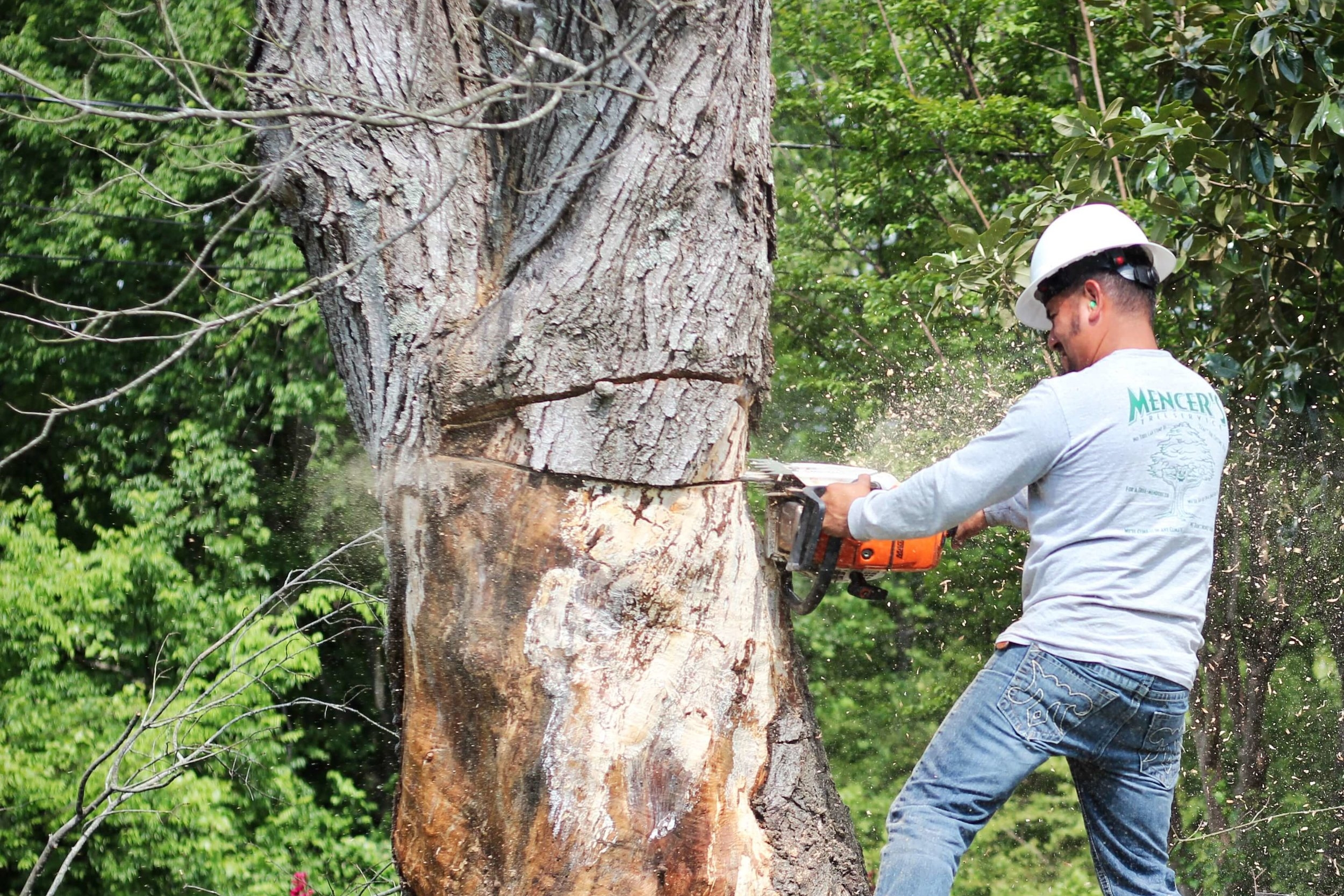 Mencer's Tree Service Tree Care Professional Tree Removal