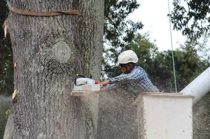 Mencer's Tree Service Certified Arborist Cutting Down Tree