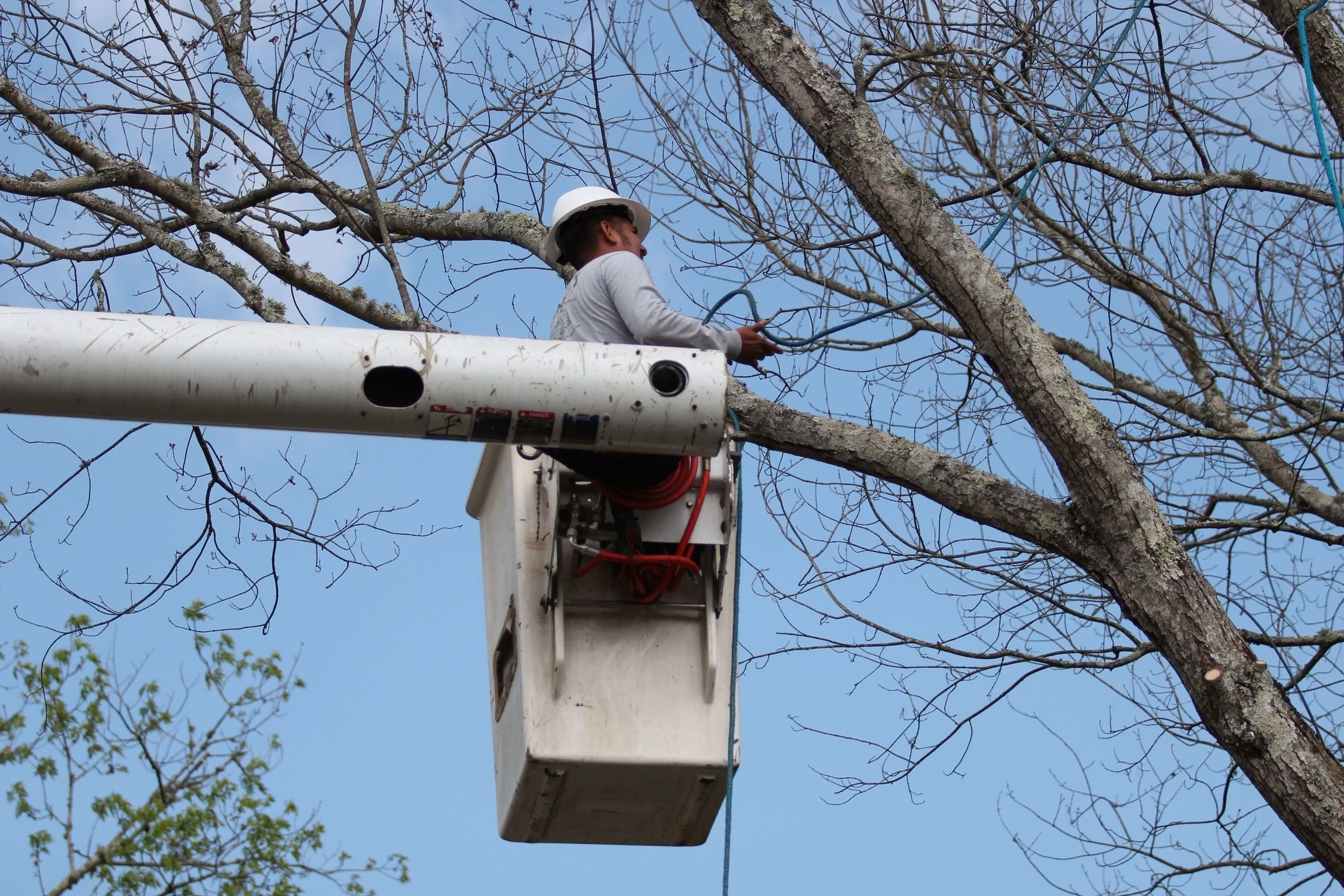 Mencer's Tree Service Bucket Truck Preparing for Tree Cabling and Bracing