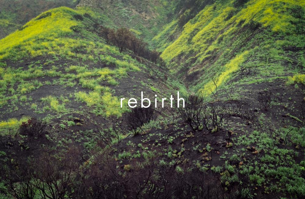 rebirthcover.jpg