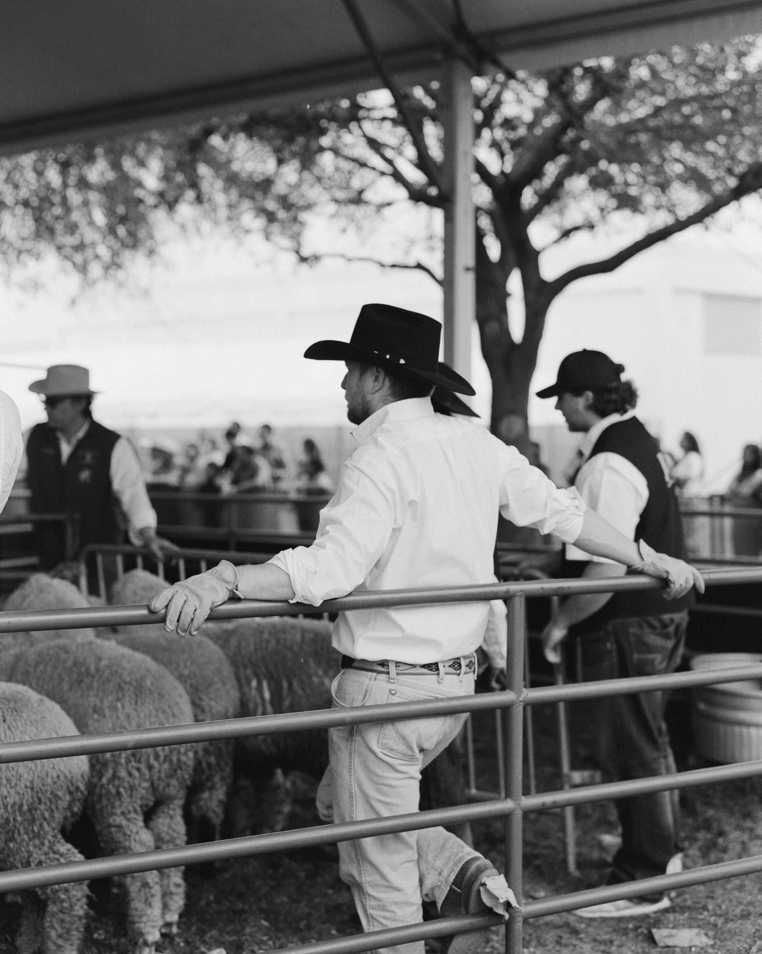 rodeo-5288-400TX-01.jpg