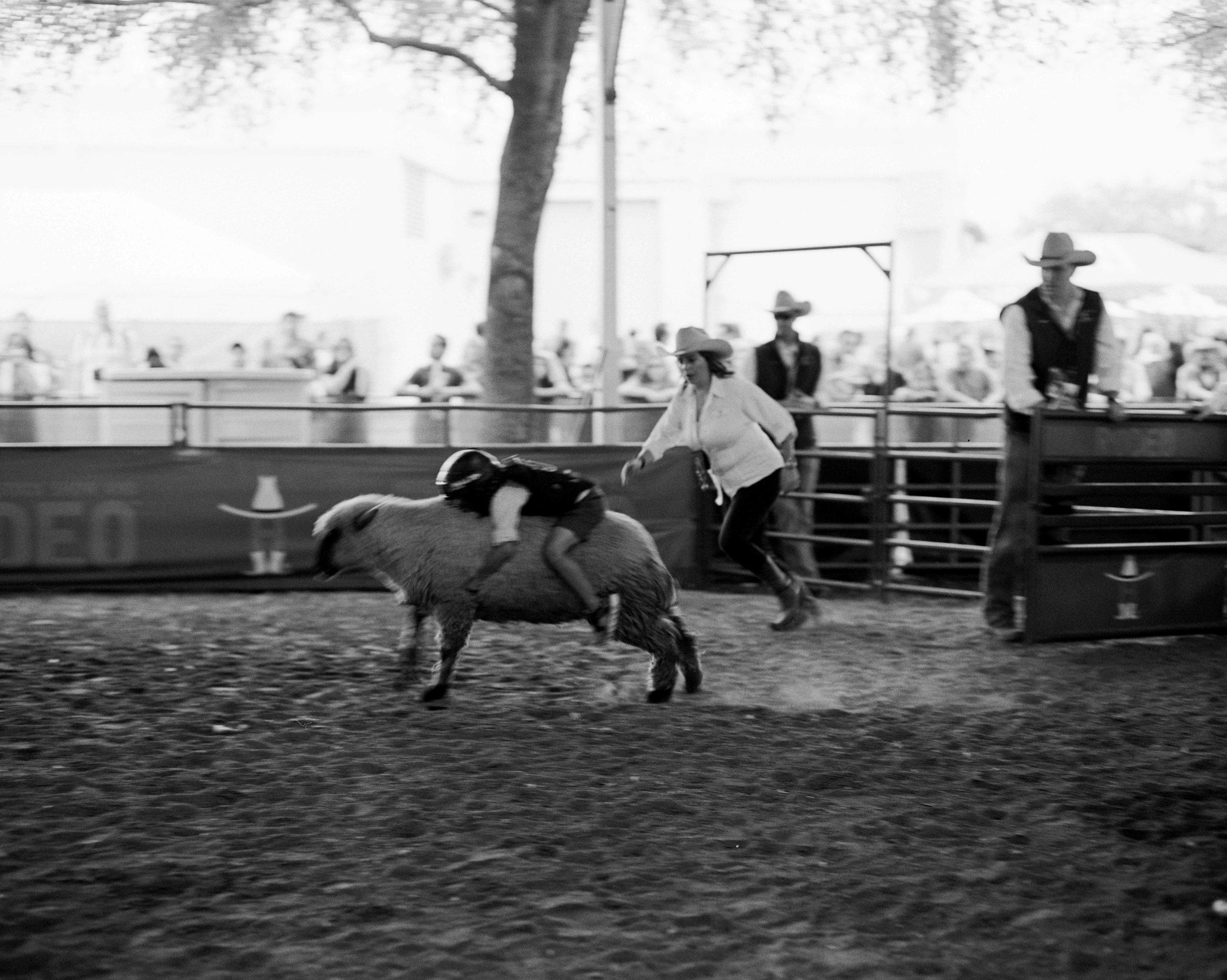 rodeo-5288-400TX-04.jpg
