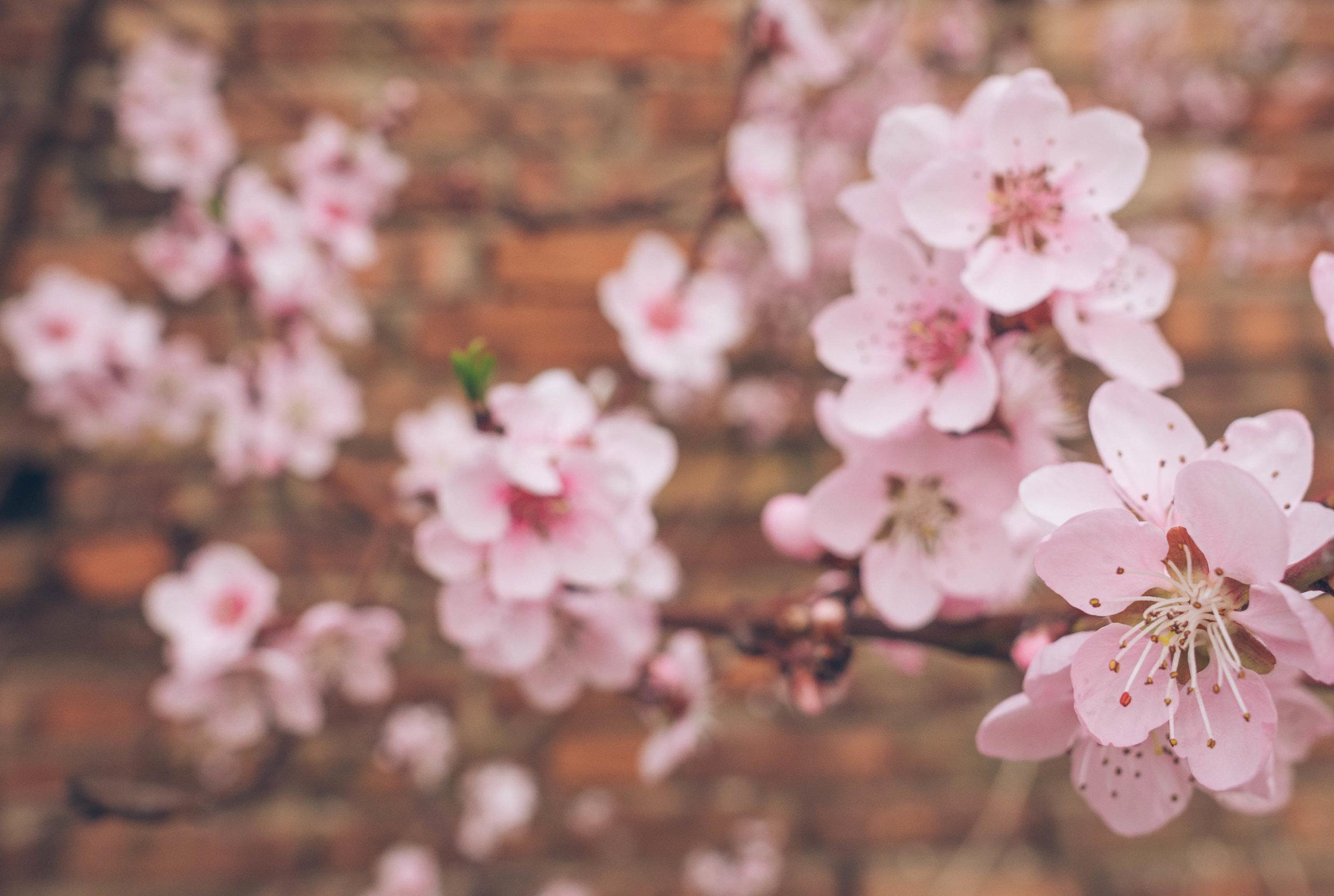 Palac Osowa Sien jest otoczony przez egzotyczne kwiaty w starym angielskim ogrodku