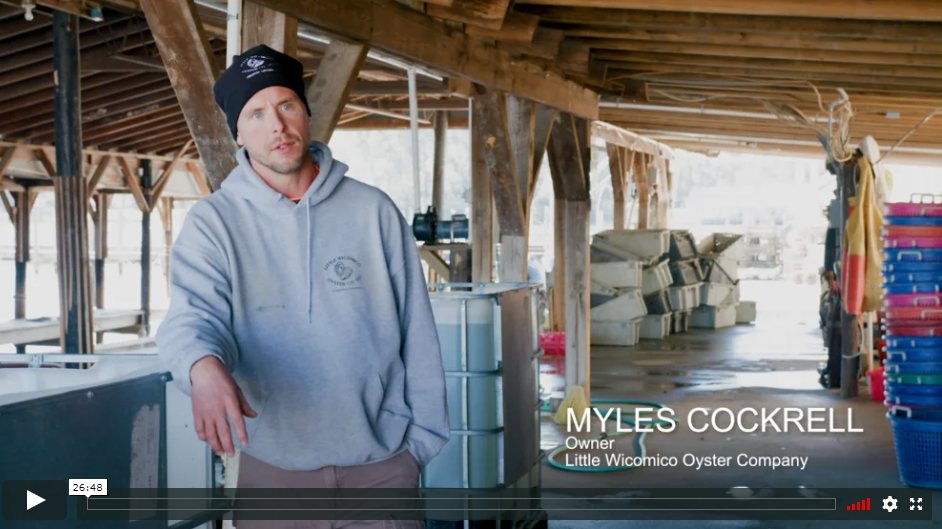 Oysters Made in Virginia_video-thm.png
