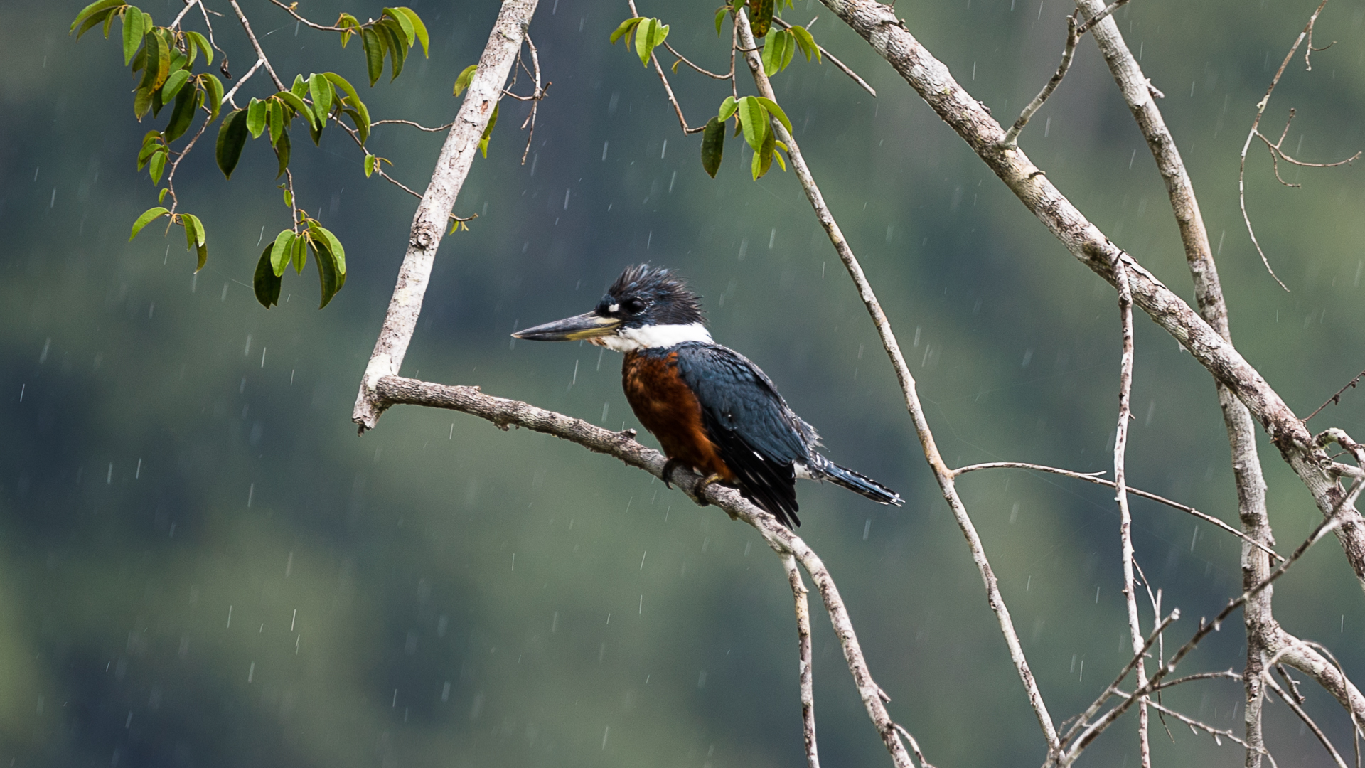 kingfisher-6506-2.jpg