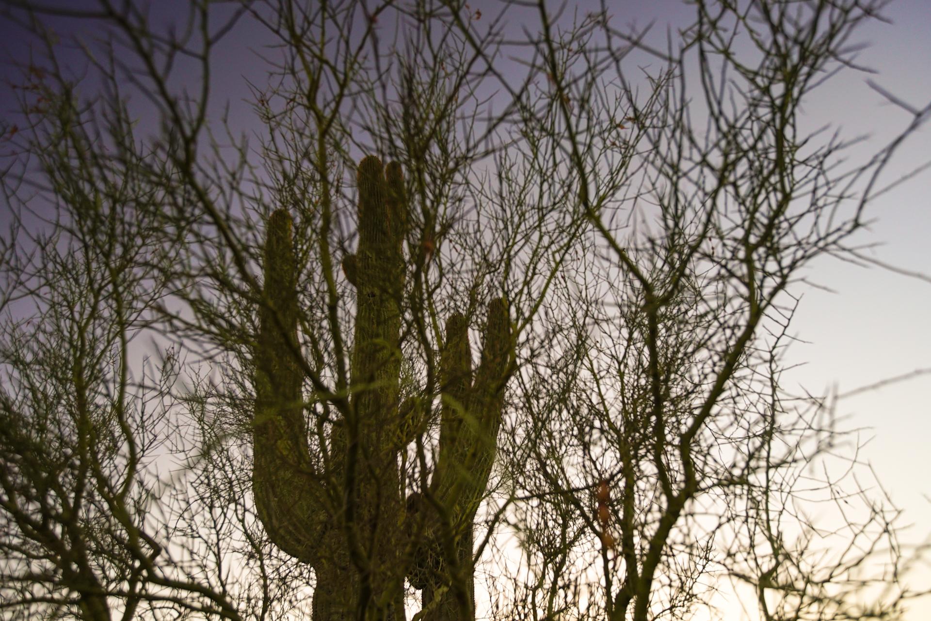 cactiarizona-08157.jpg