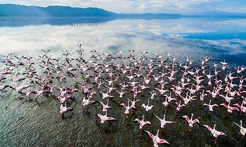 Sababu_Safaris_Lake-Manyara_500x300px.jpg