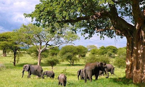 Sababu_Safaris_Tarangire_500x300px.jpg