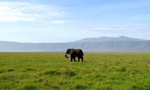 Sababu_Safaris_NgorongoroCrater_500x300px.jpg