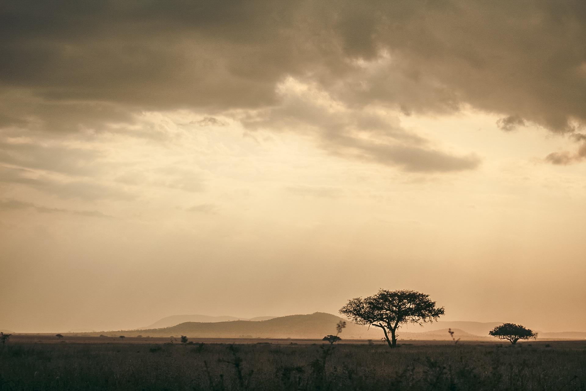 Sababu Safaris_AfricaSunset.jpeg