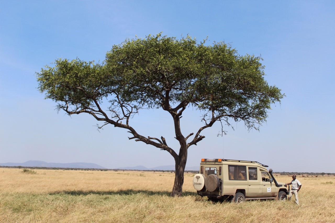 Sababu_Serengeti2.jpg