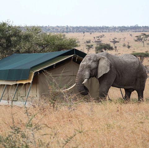 ElephantInFrontOfMyTent.jpg