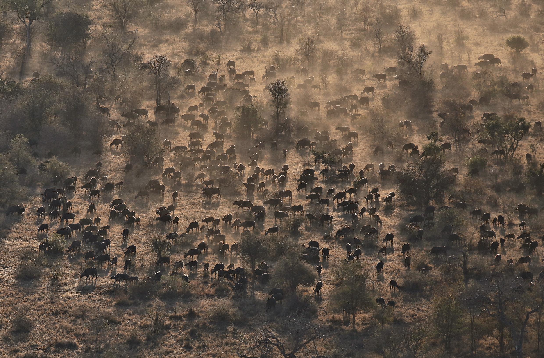 wildebeest_airshot.jpg