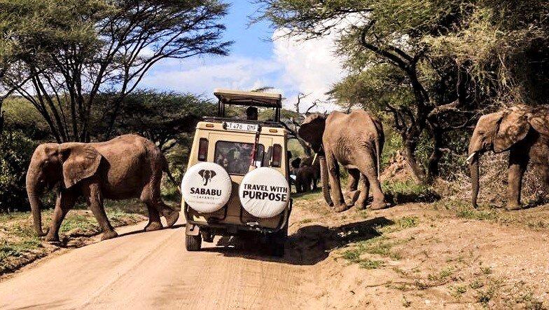 Sababu Elephants.jpeg