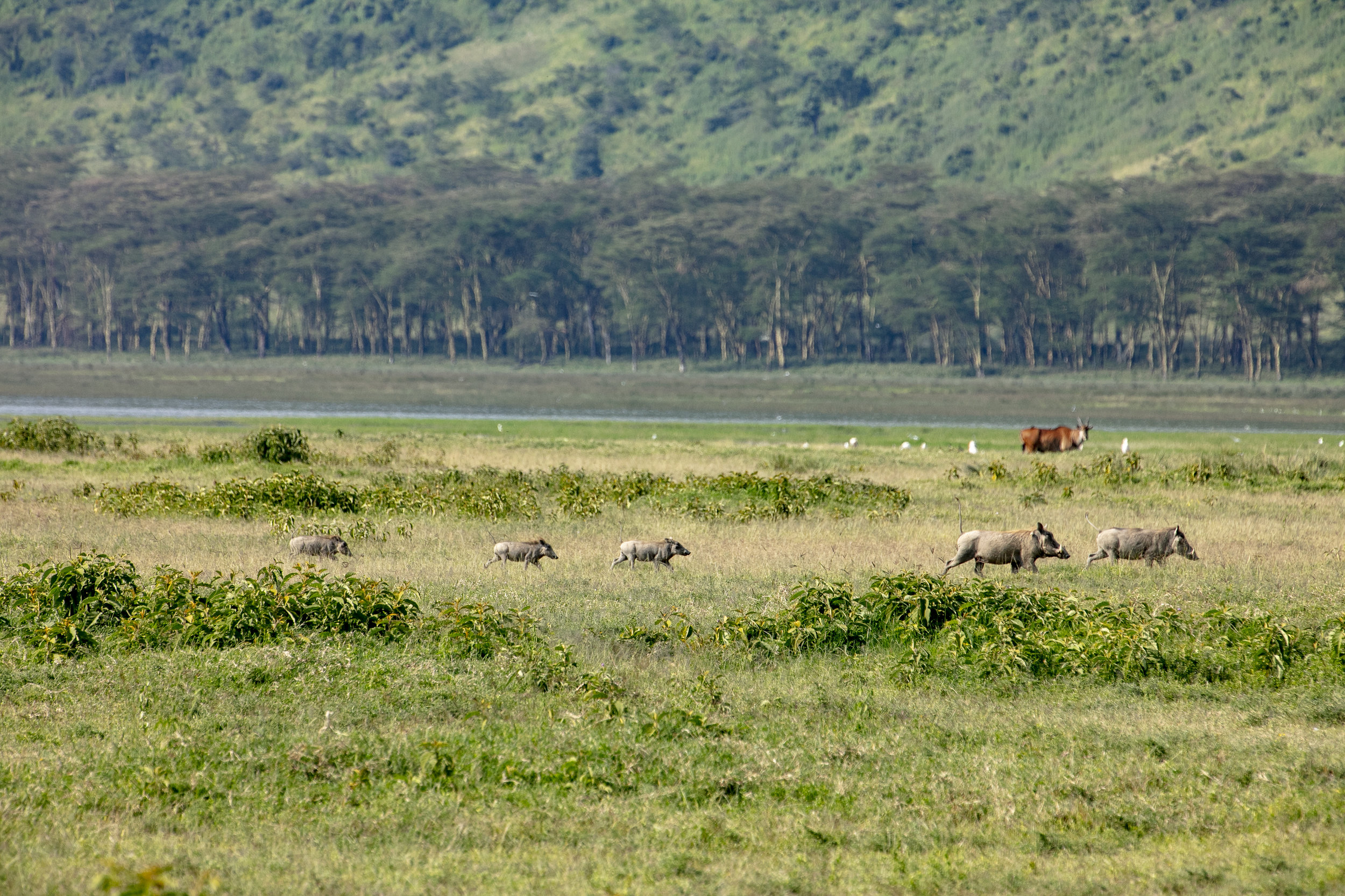 African Adventure - 19 July '18 - Nairobi to Nakuru National Park - 032.JPG