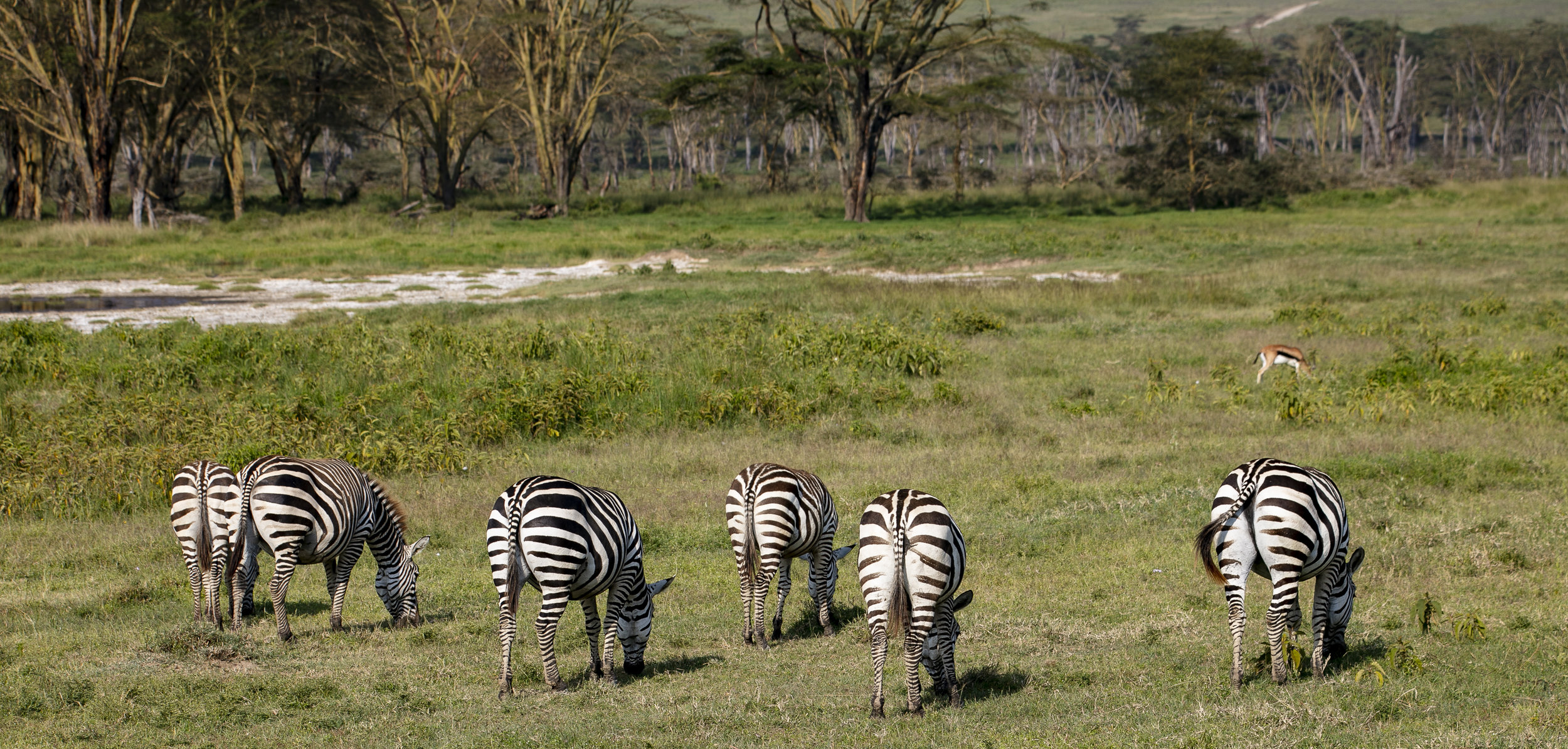 African Adventure - 19 July '18 - Nairobi to Nakuru National Park - 045.JPG