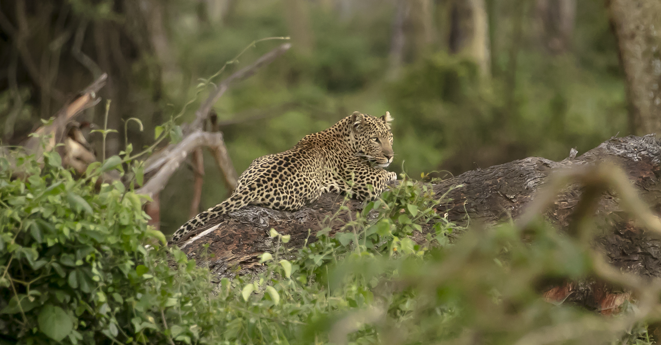 African Adventure - 19 July '18 - Nairobi to Nakuru National Park - 055_1.JPG