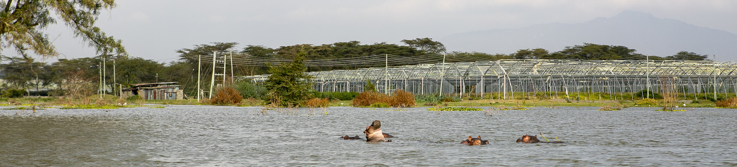 African Adventure - 20 July '18 - Nakuru National Park to Lake Naivasha - 081.JPG