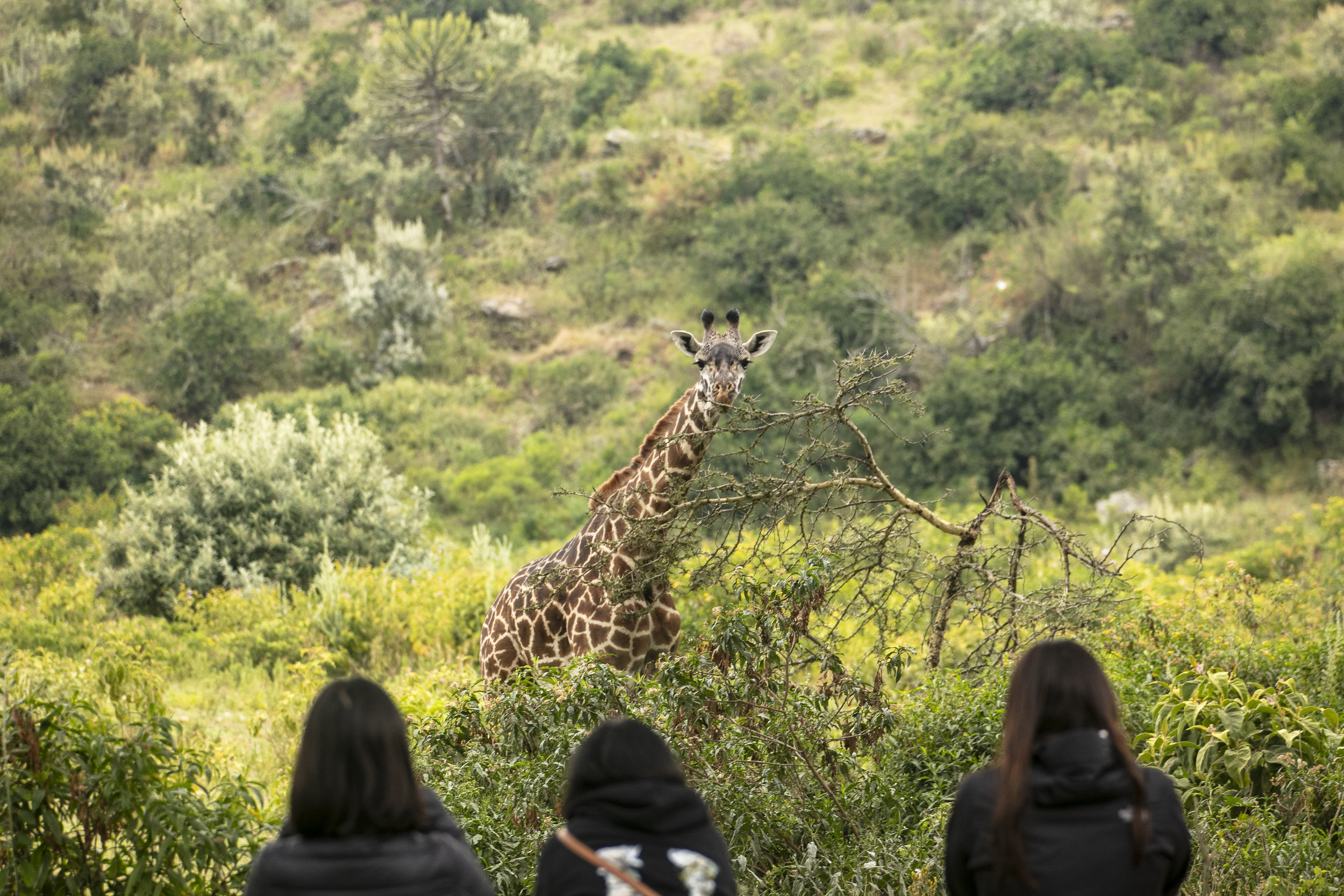 African Adventure - 21 July '18 - Lake Naivasha to Crater Lake Game Sanctuary - 008.JPG