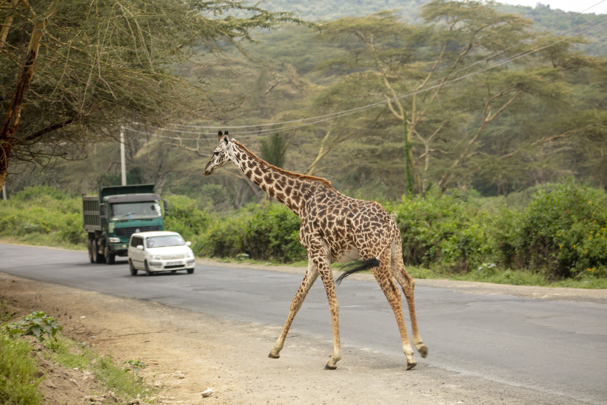 African Adventure - 21 July '18 - Lake Naivasha to Crater Lake Game Sanctuary - 010.JPG