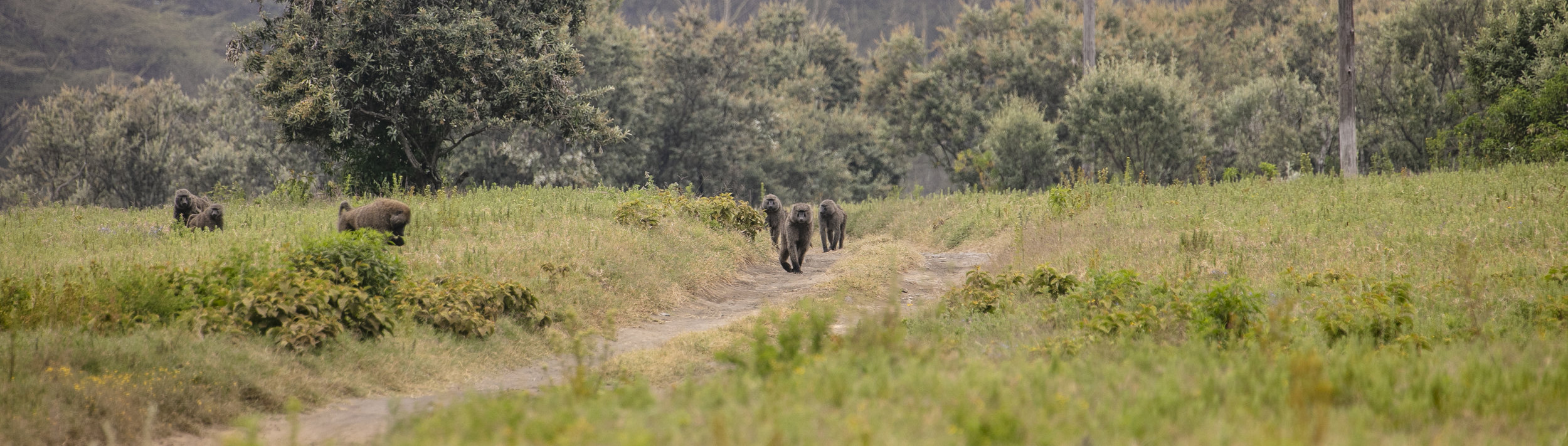 African Adventure - 21 July '18 - Lake Naivasha to Crater Lake Game Sanctuary - 017.JPG