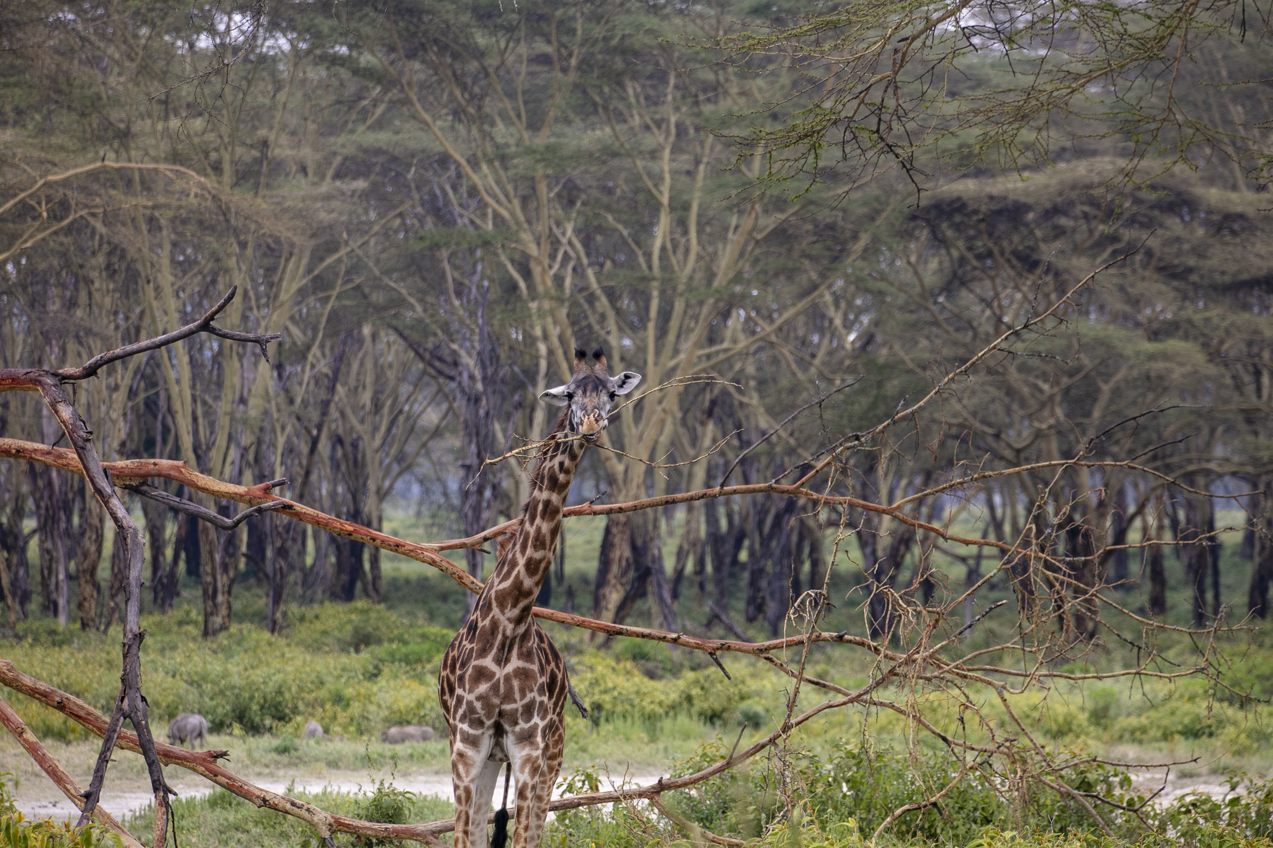 African Adventure - 21 July '18 - Lake Naivasha to Crater Lake Game Sanctuary - 027.JPG