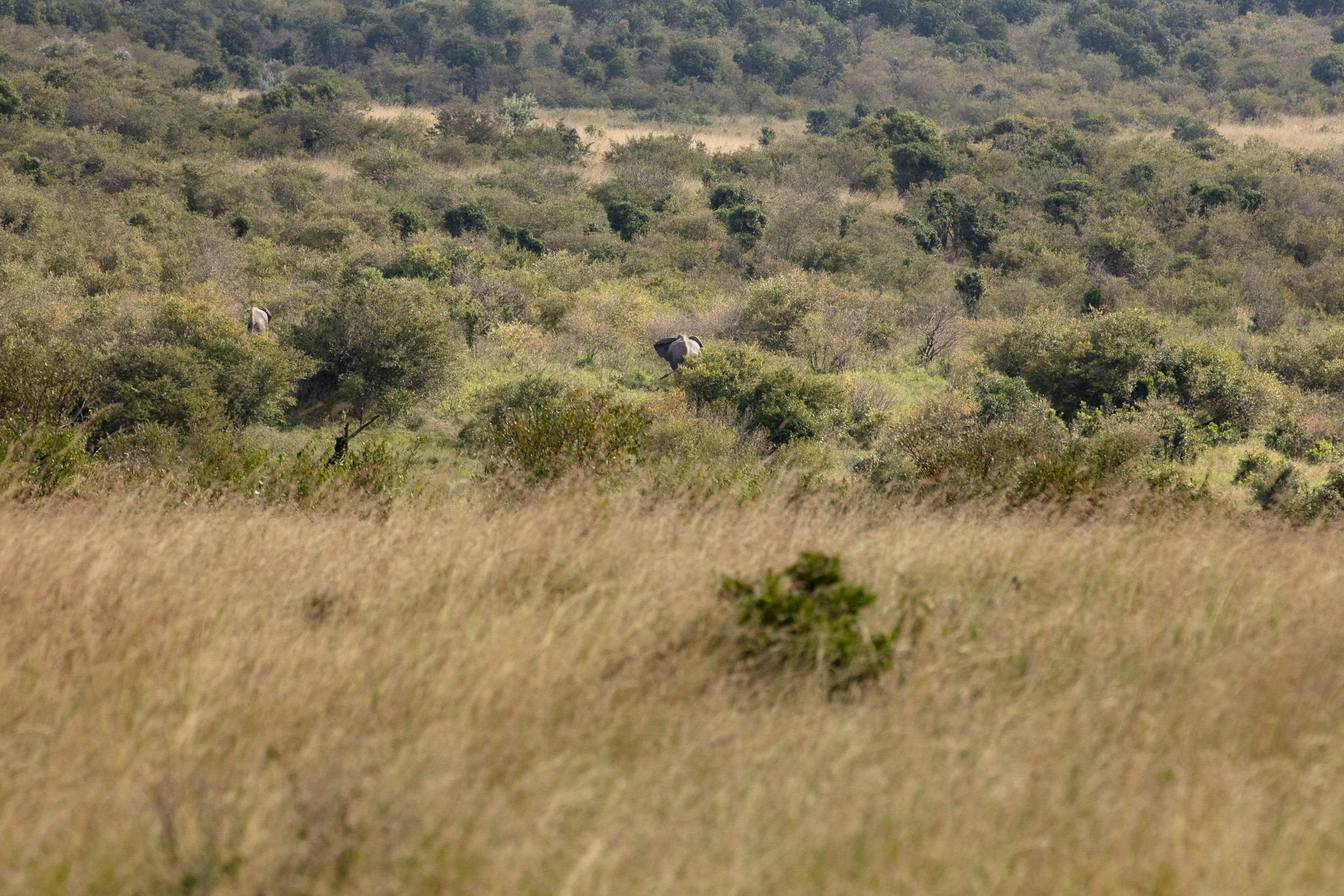 African Adventure - 23 July '18 - From the Loita Hills Maasai Village to the Masai Mara National Reserve - 057.JPG