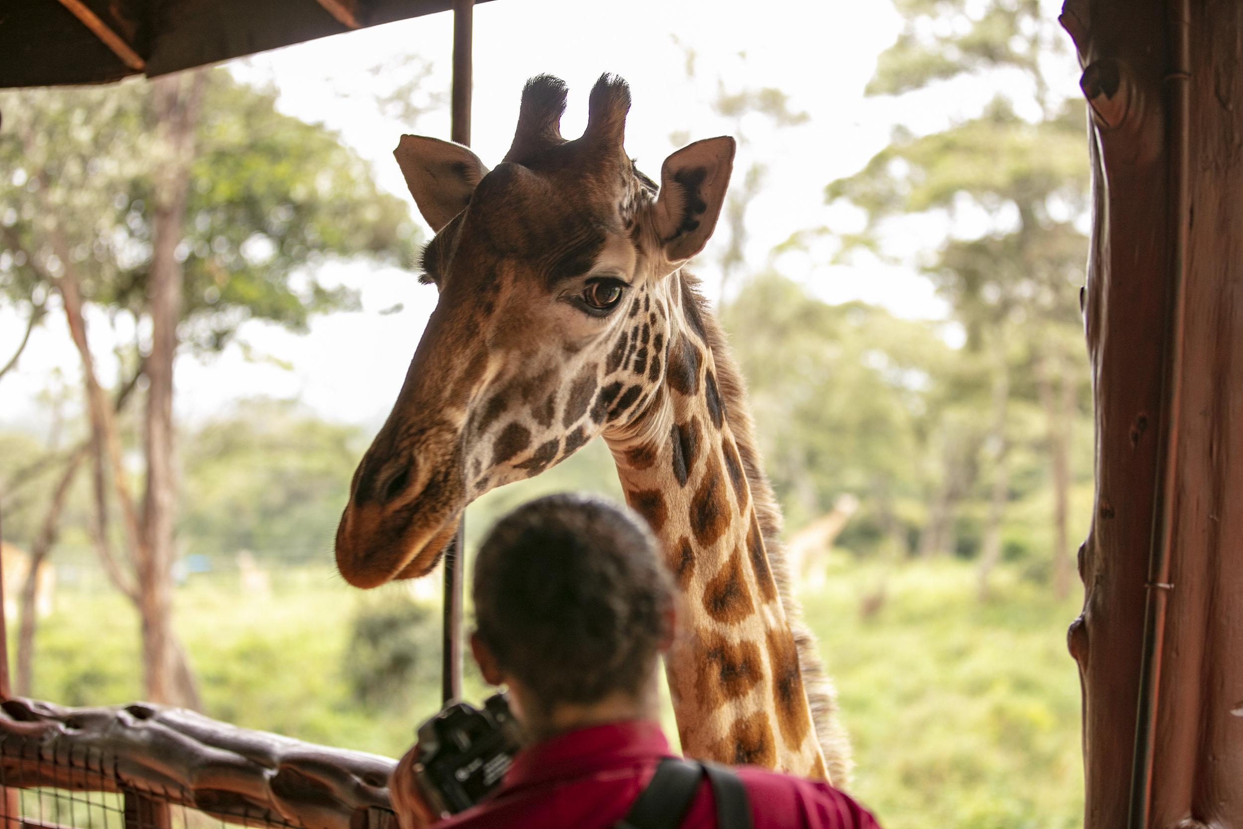 African Adventure - 16-18 July '18 - 084.JPG