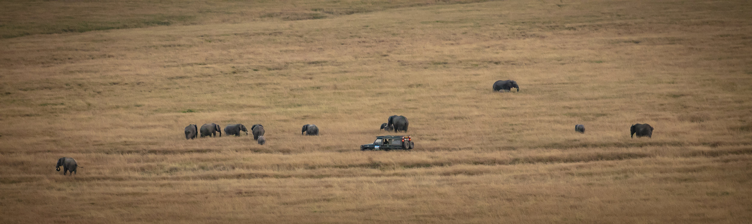 African Adventure - 24 July '18 - Masai Mara National Reserve - 018.JPG