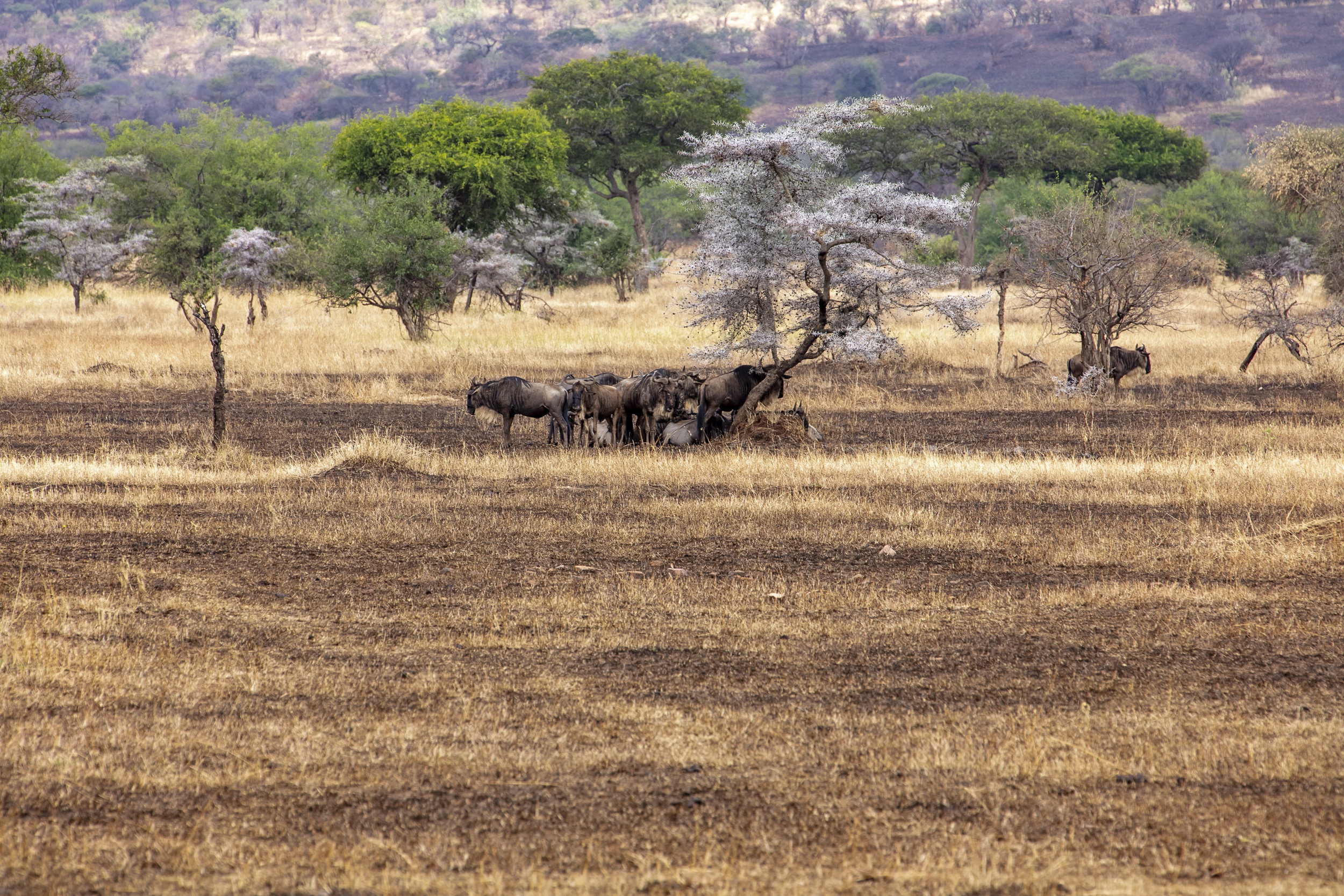 African Adventure - 28 July '18 - Musoma, Tanzania to Serengeti National Park - 018.JPG