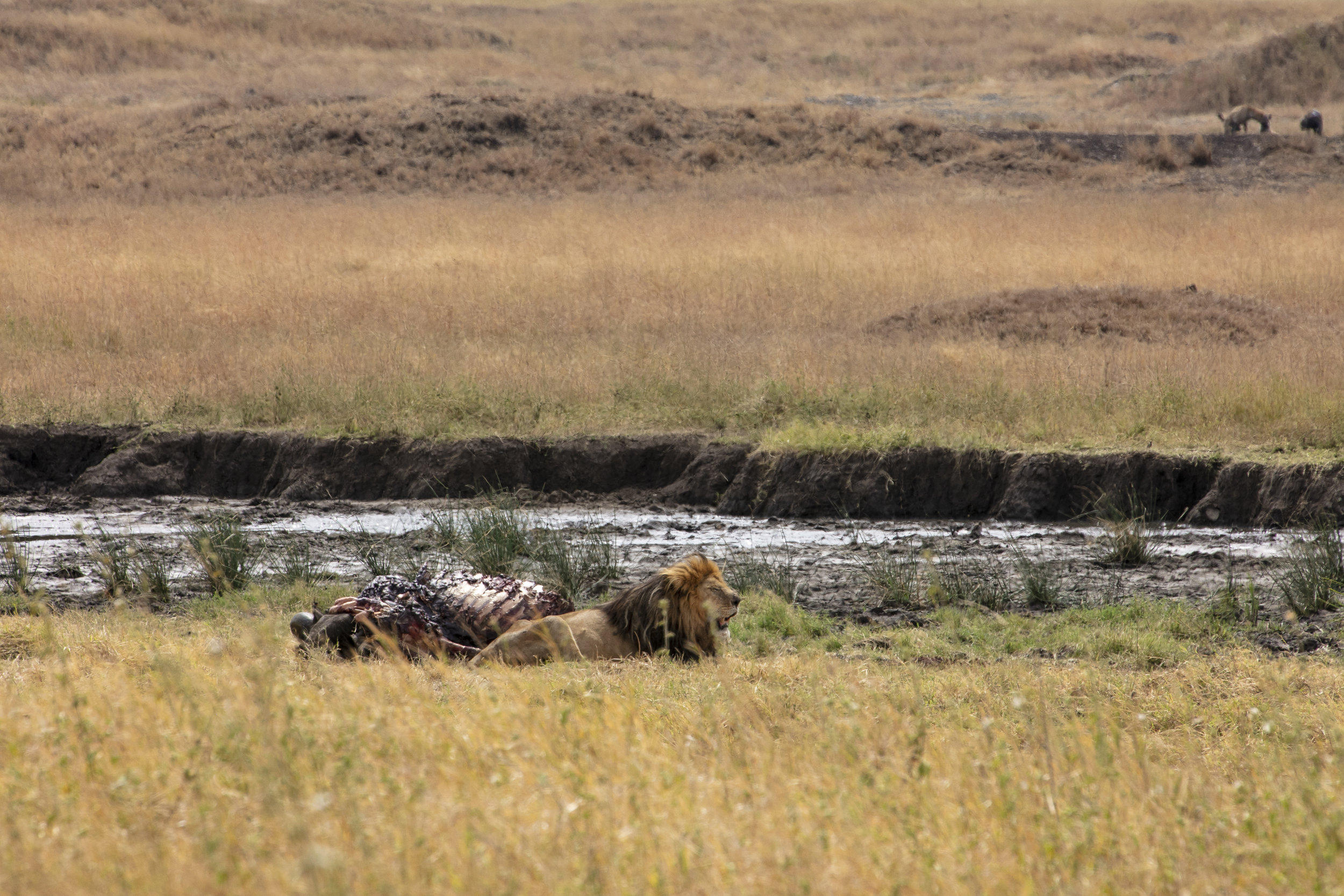 African Adventure - 30 July '18 - Serengeti National Park & Ngorongoro (Crater) Conservation Area - 001.JPG