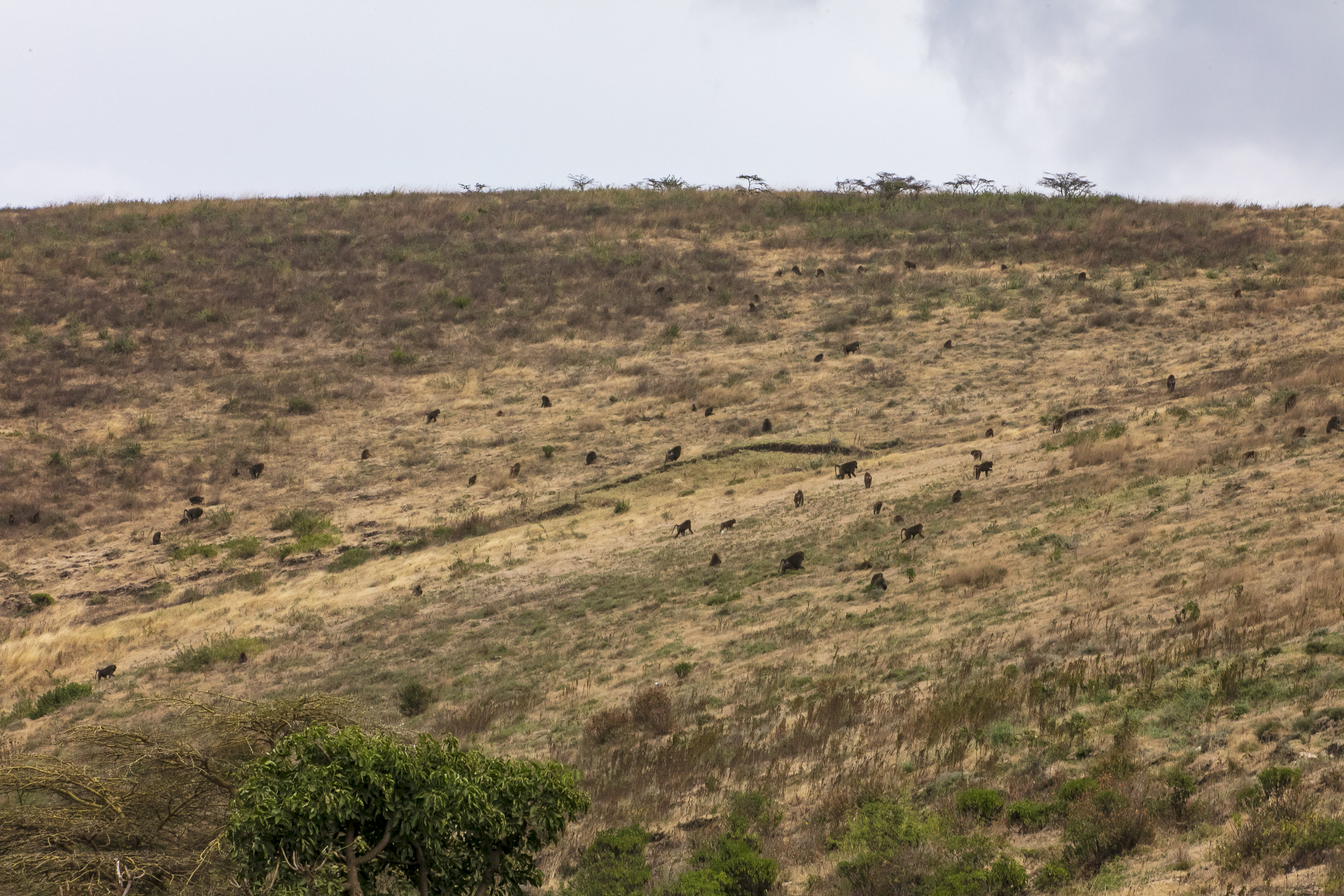 African Adventure - 30 July '18 - Serengeti National Park & Ngorongoro (Crater) Conservation Area - 005.JPG