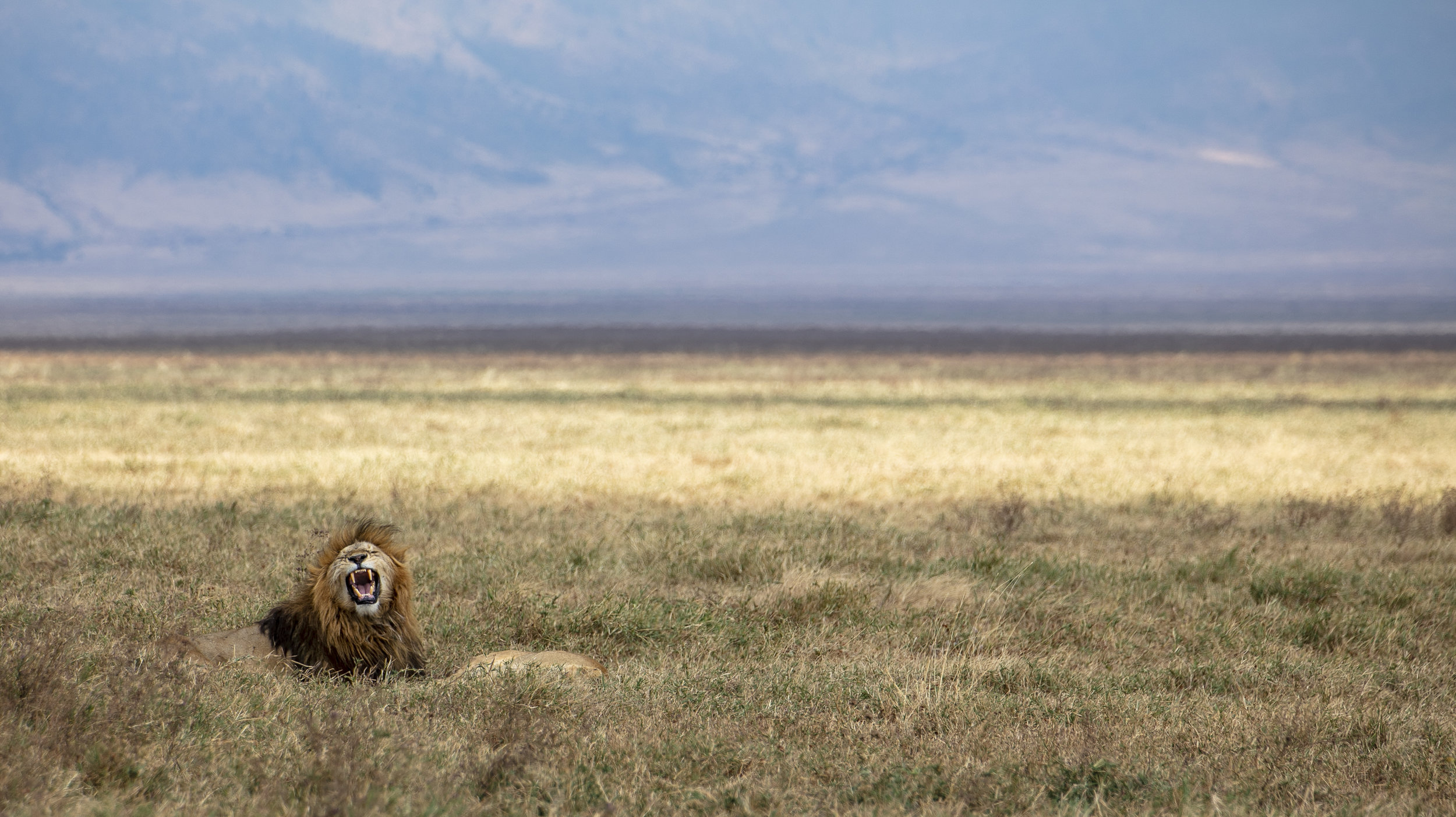 African Adventure - 31 July '18 - Ngorongoro (Crater) Conservation Area to Meserani, Tanzania - 036.JPG