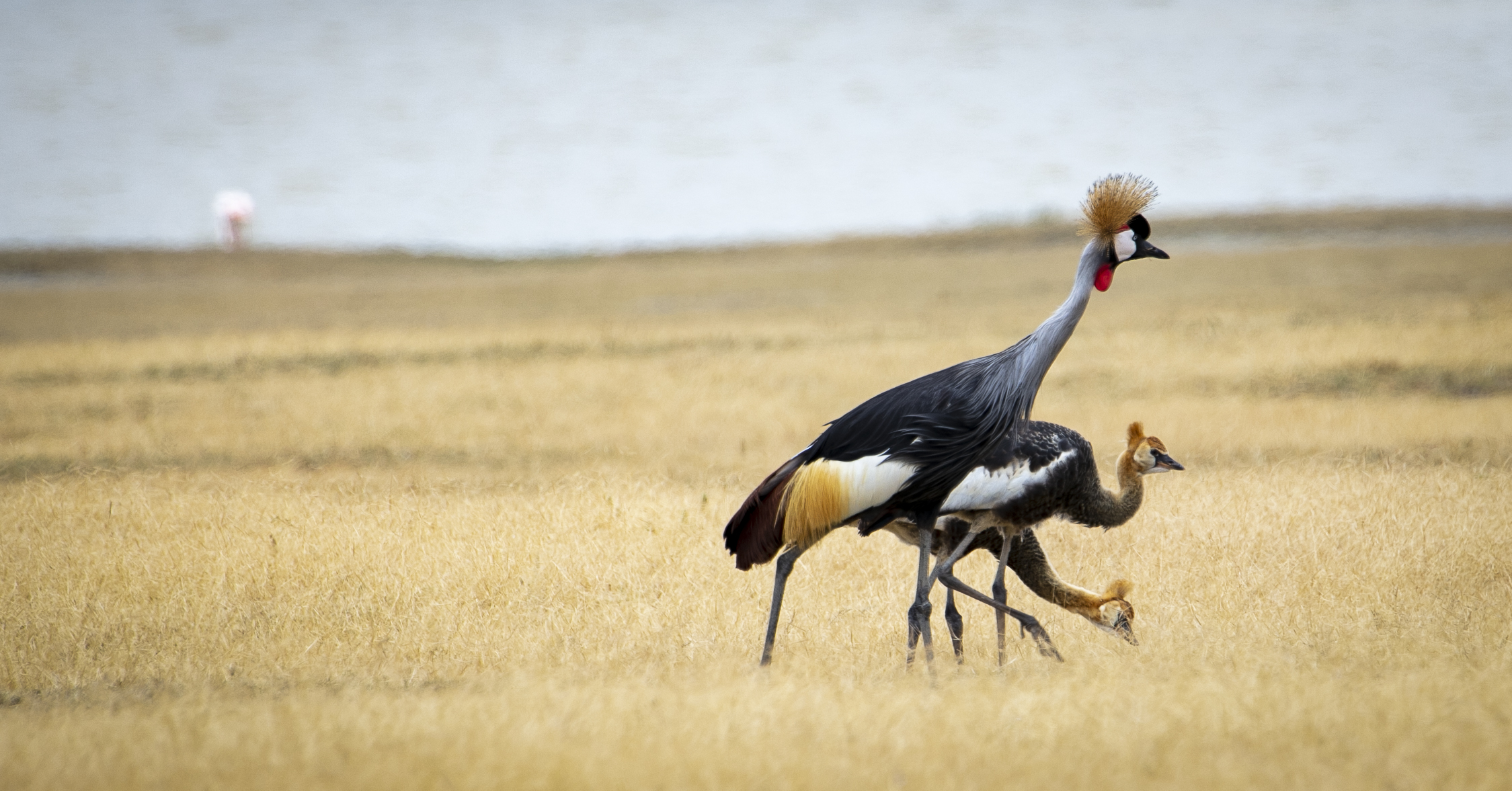 African Adventure - 31 July '18 - Ngorongoro (Crater) Conservation Area to Meserani, Tanzania - 048.JPG